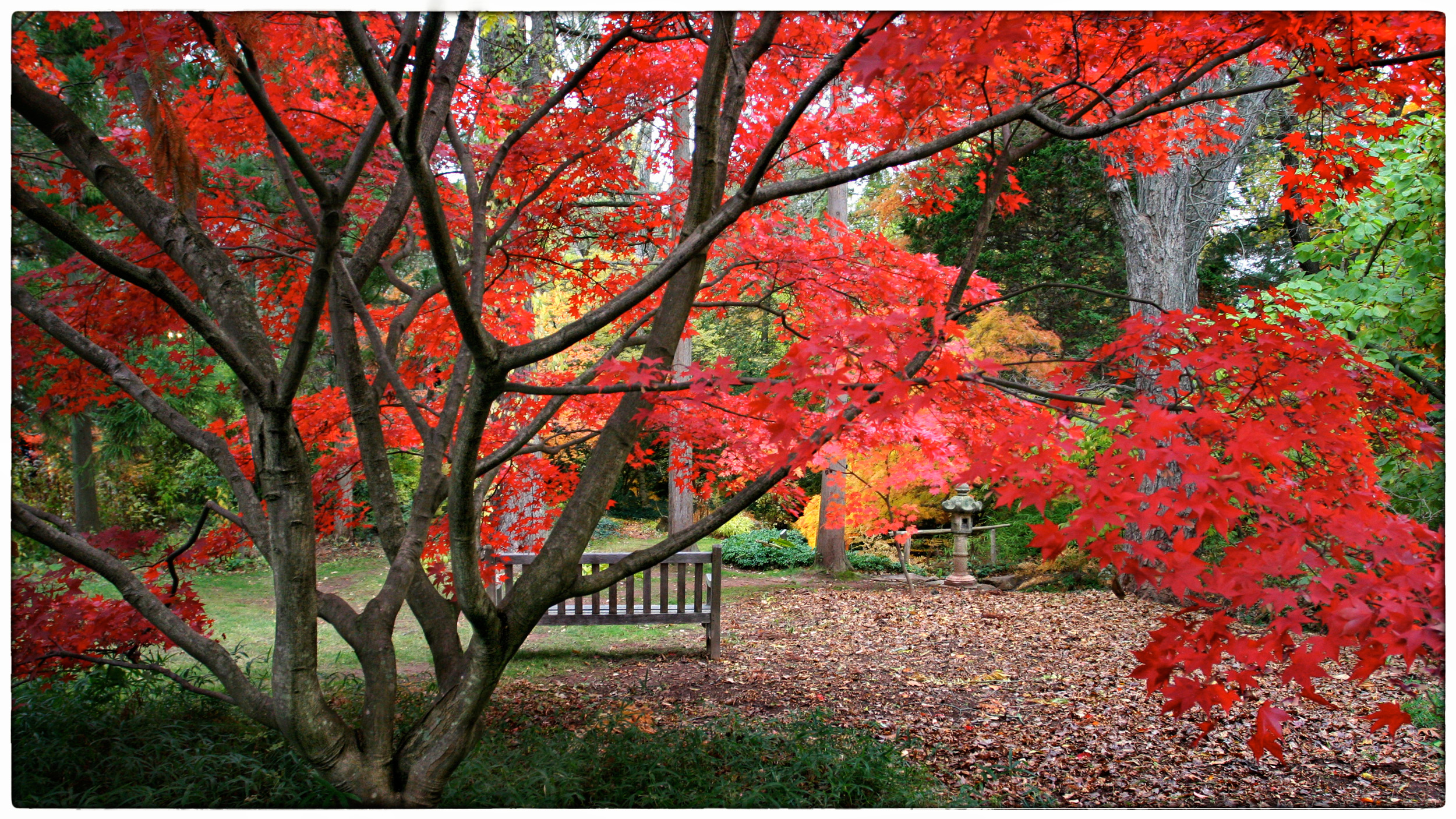 Willowwood-Maples-1.jpg
