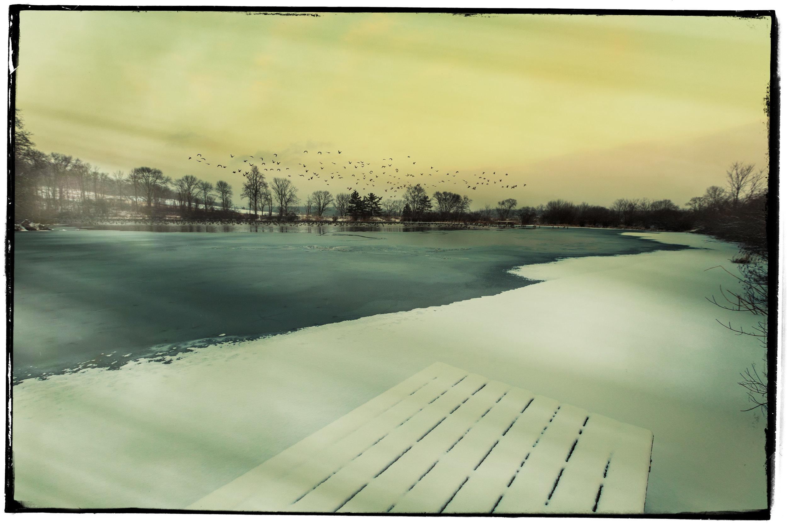 Pond-&-Geese-6aa.jpg