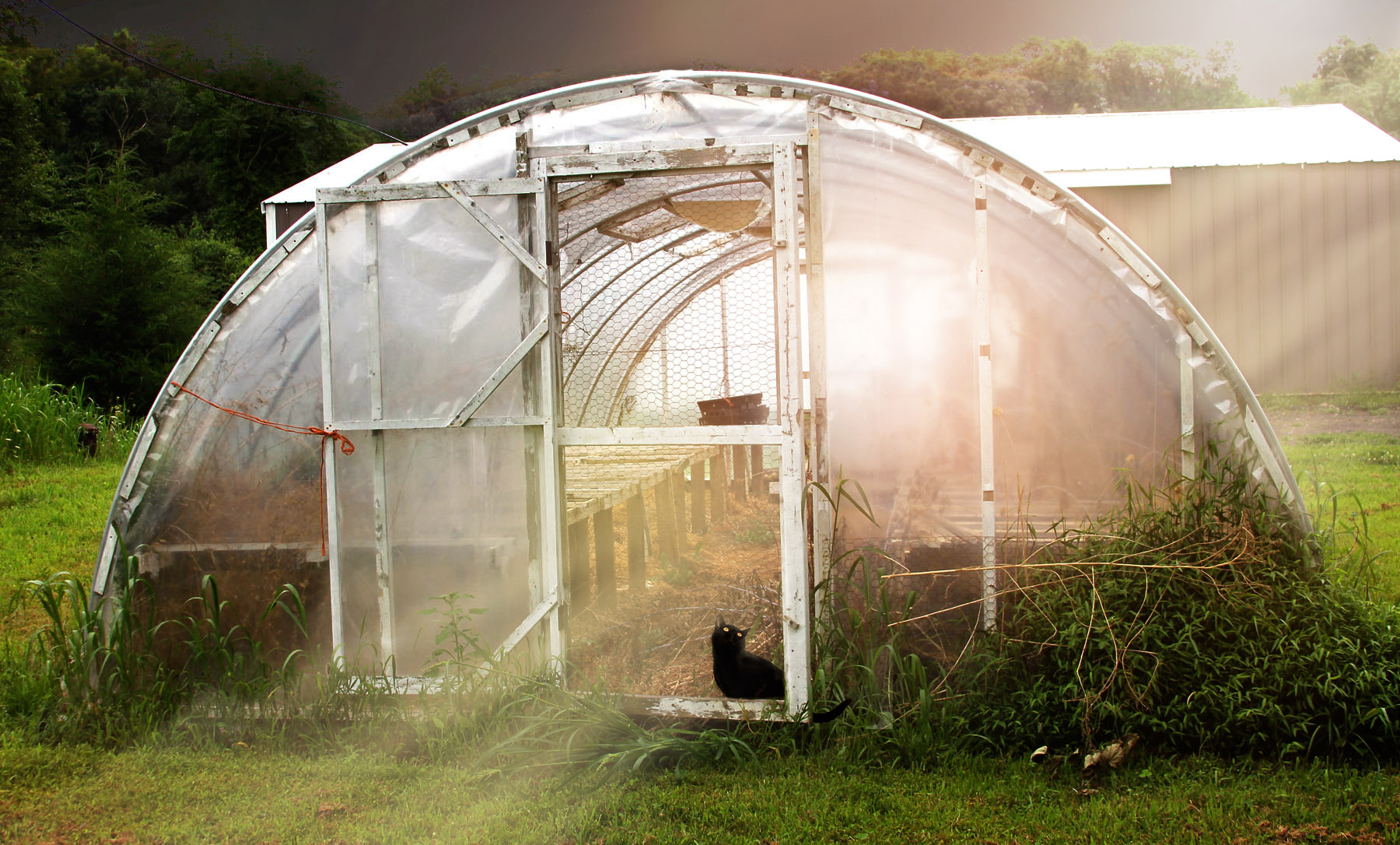 GreenhouseGRiffin.jpg