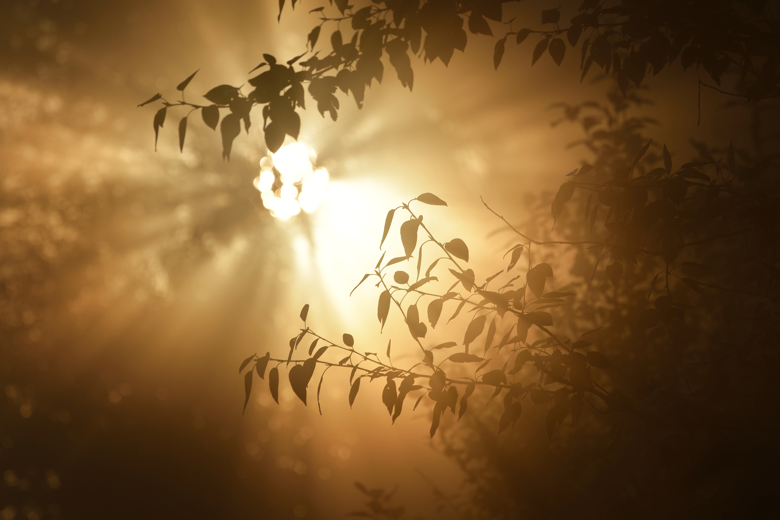 sunlight throug tree.jpg