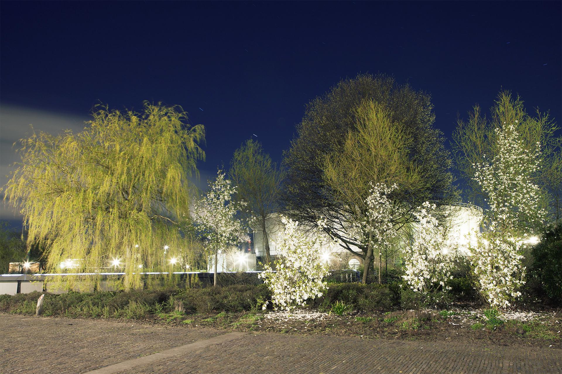 Nacht-bloesem-Amstedam-westerpark-bomen-fotografie-landschap.jpg