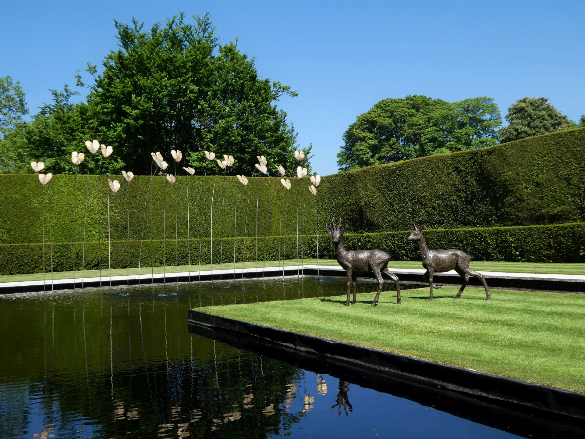 Roe deer in the water garden
