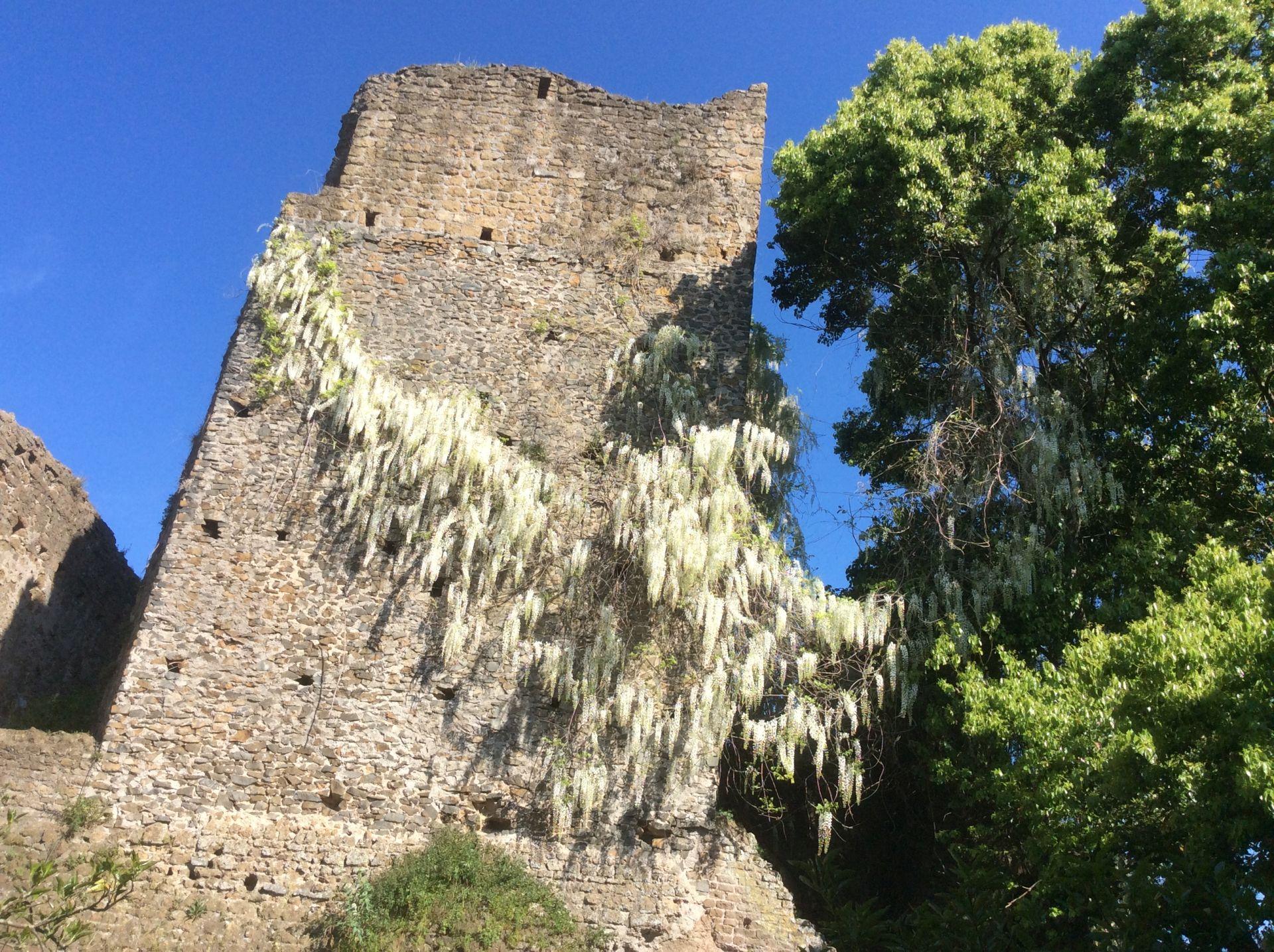 Torrechia