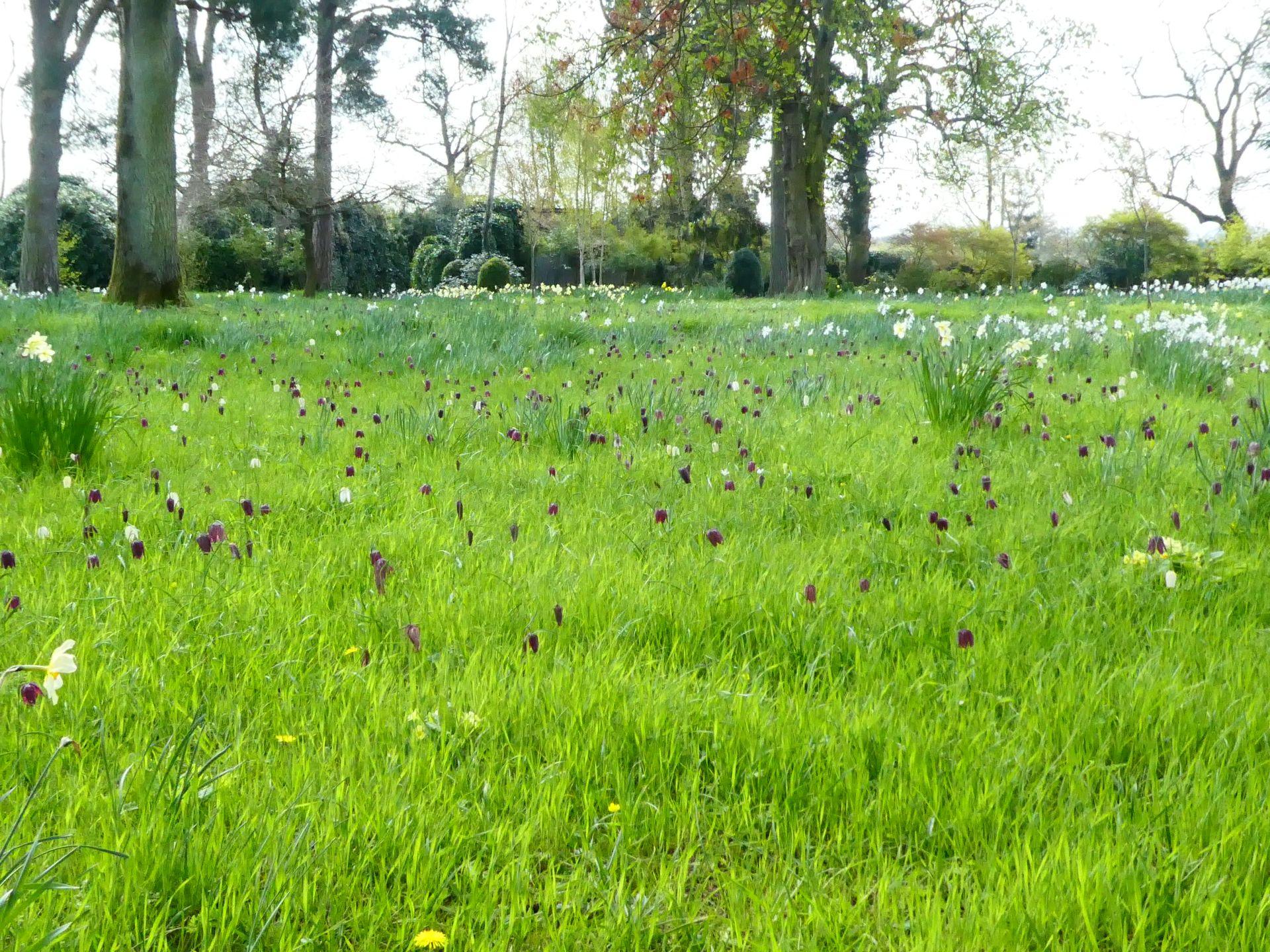 Morton Hall's meadow