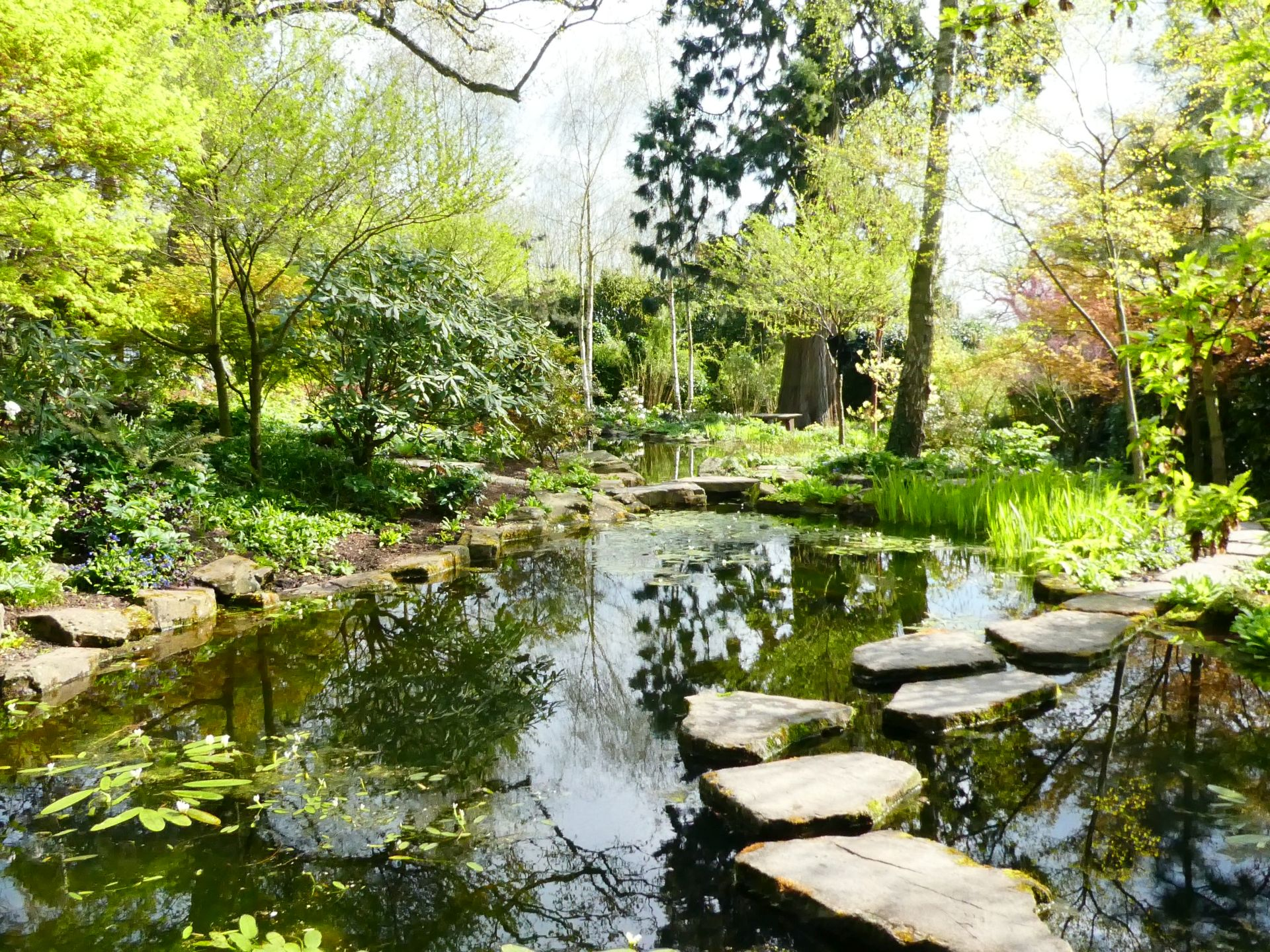Morton Hall's Japanese lake