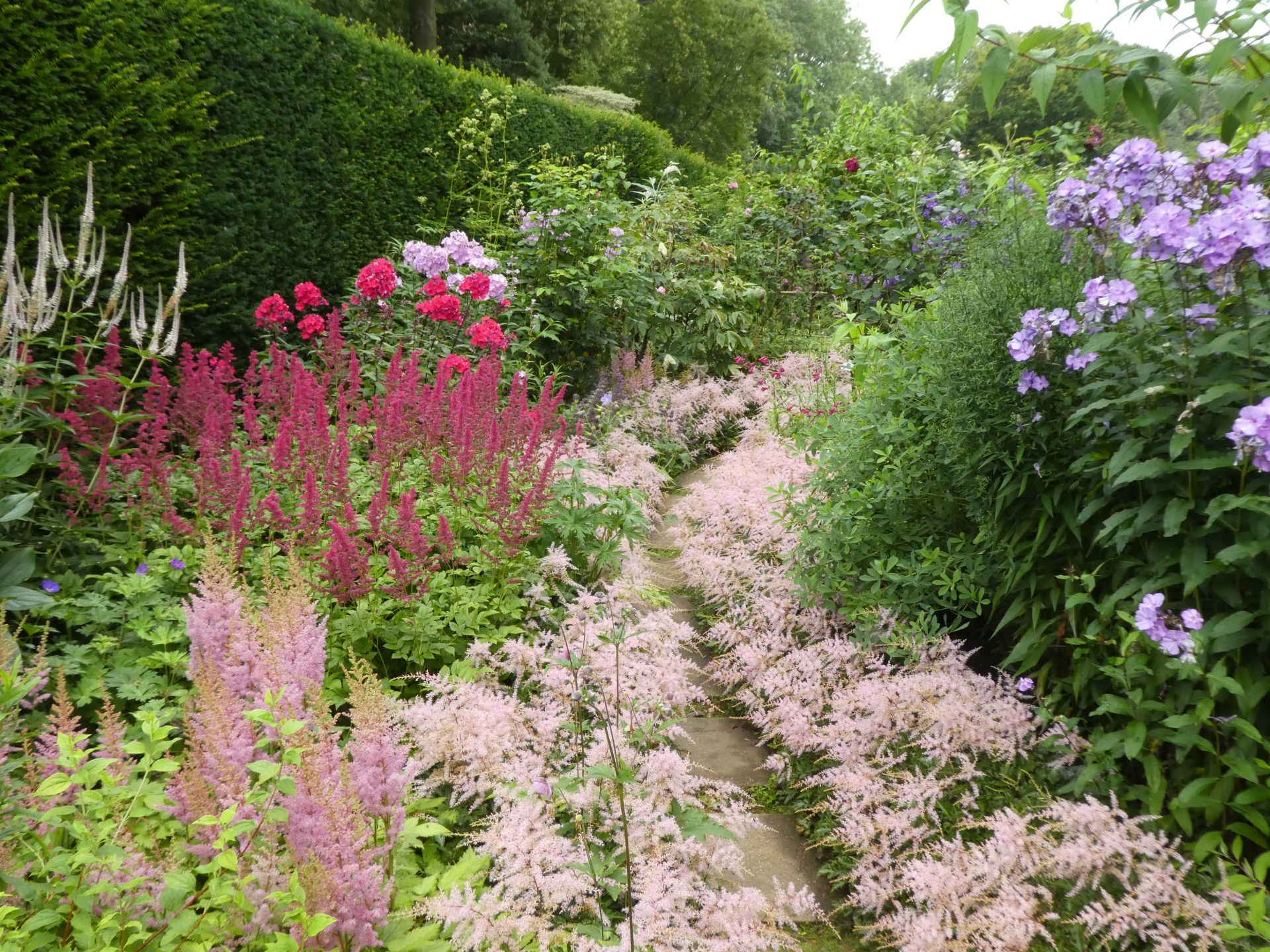 Astilbe Sprite edging the path.