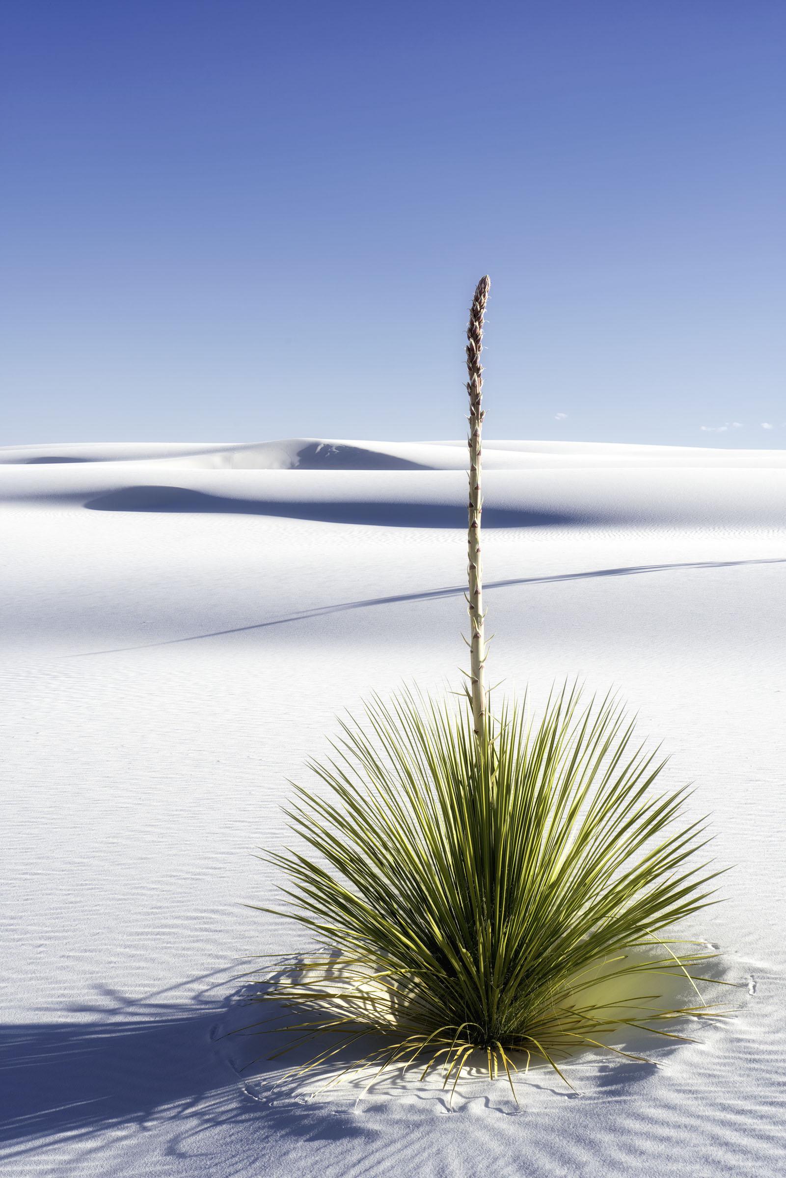 DesertSolitaire-Web.jpg