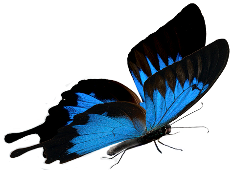 butterfly_alone.png