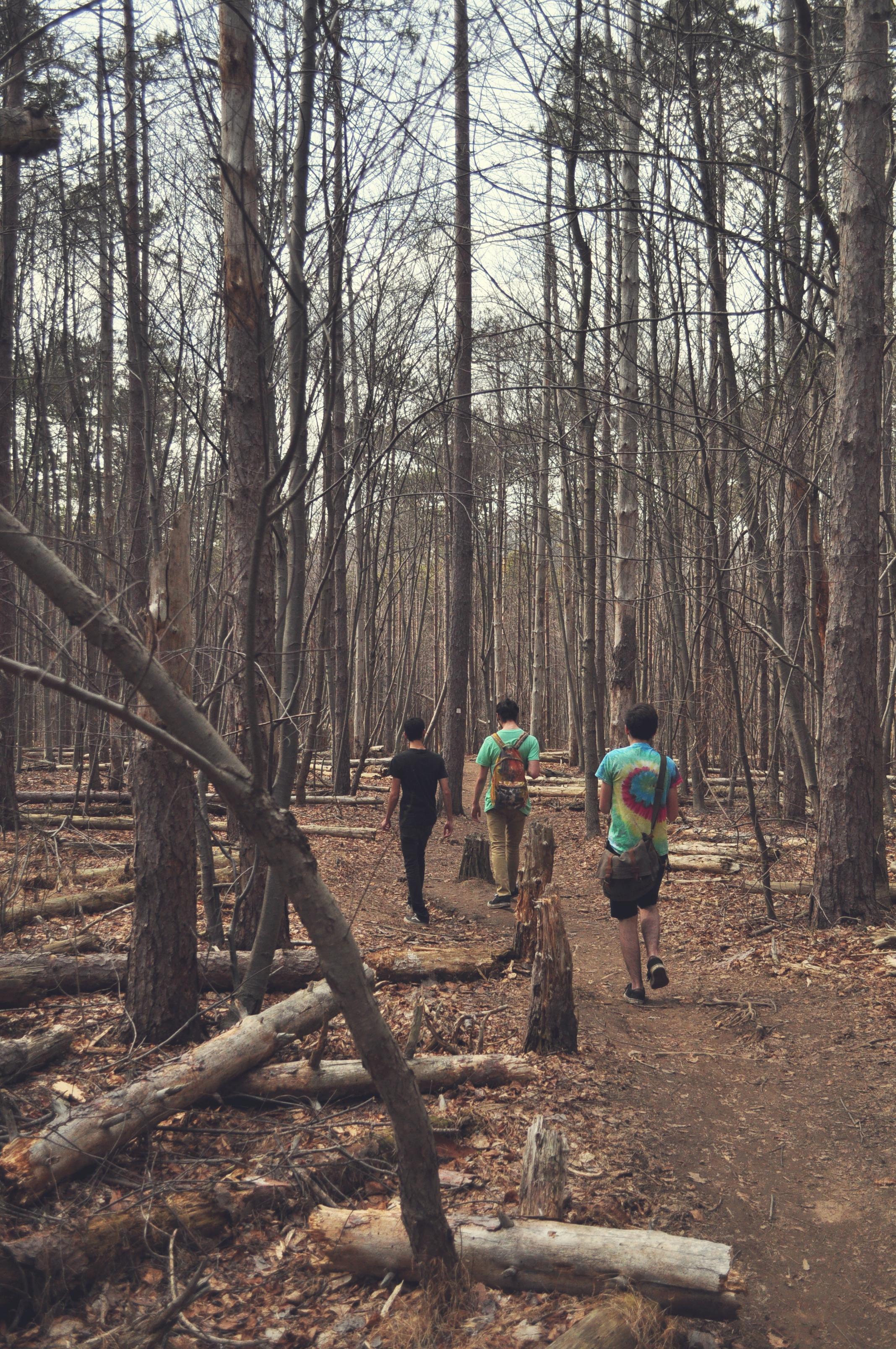 walking in the woods.jpg