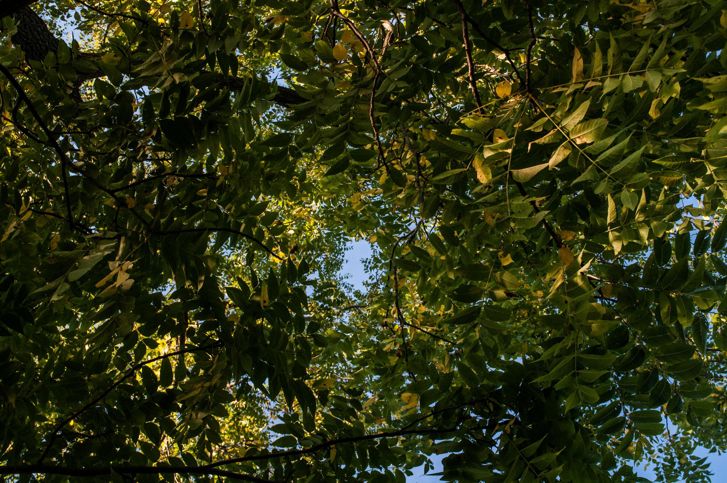 cherrysprings2-5.jpg
