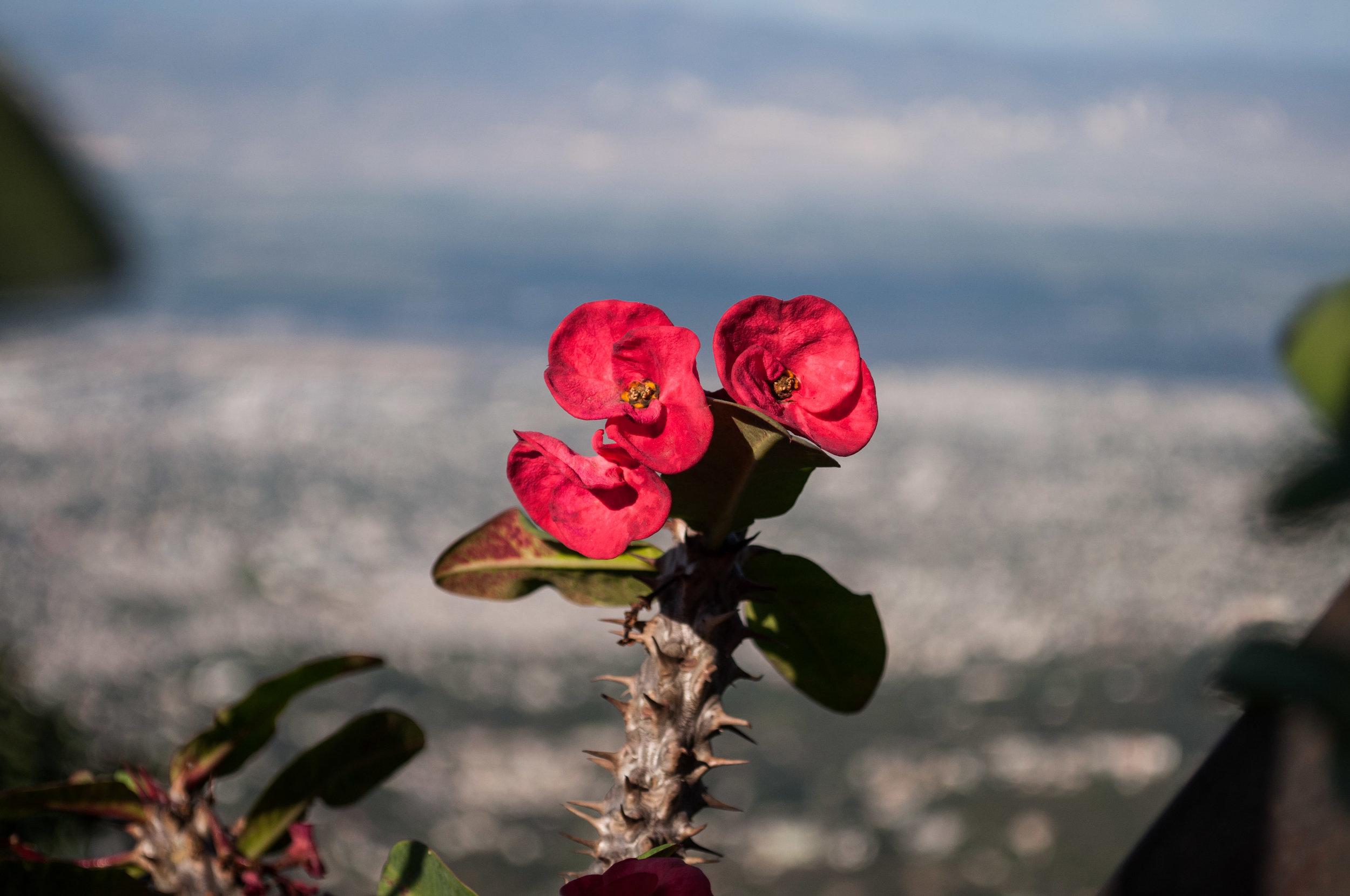 Haiti 5-13.jpg
