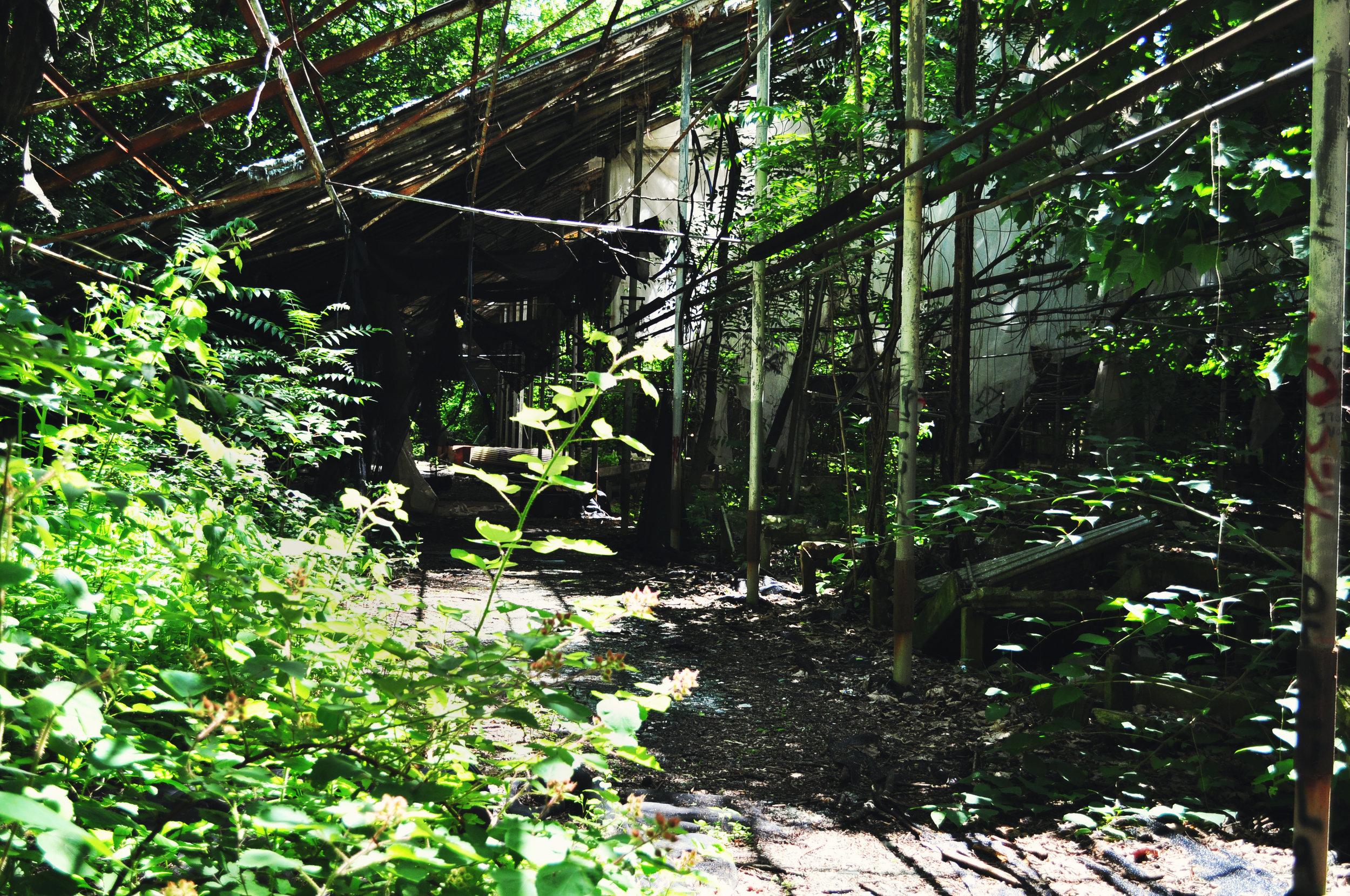 greenhouse9.jpg