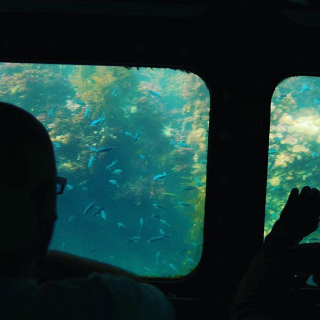 submarine views of young Blacksmith out the window on Sea  Life Discovery.  #sealifediscovery #balboafunzone @sealifediscovery