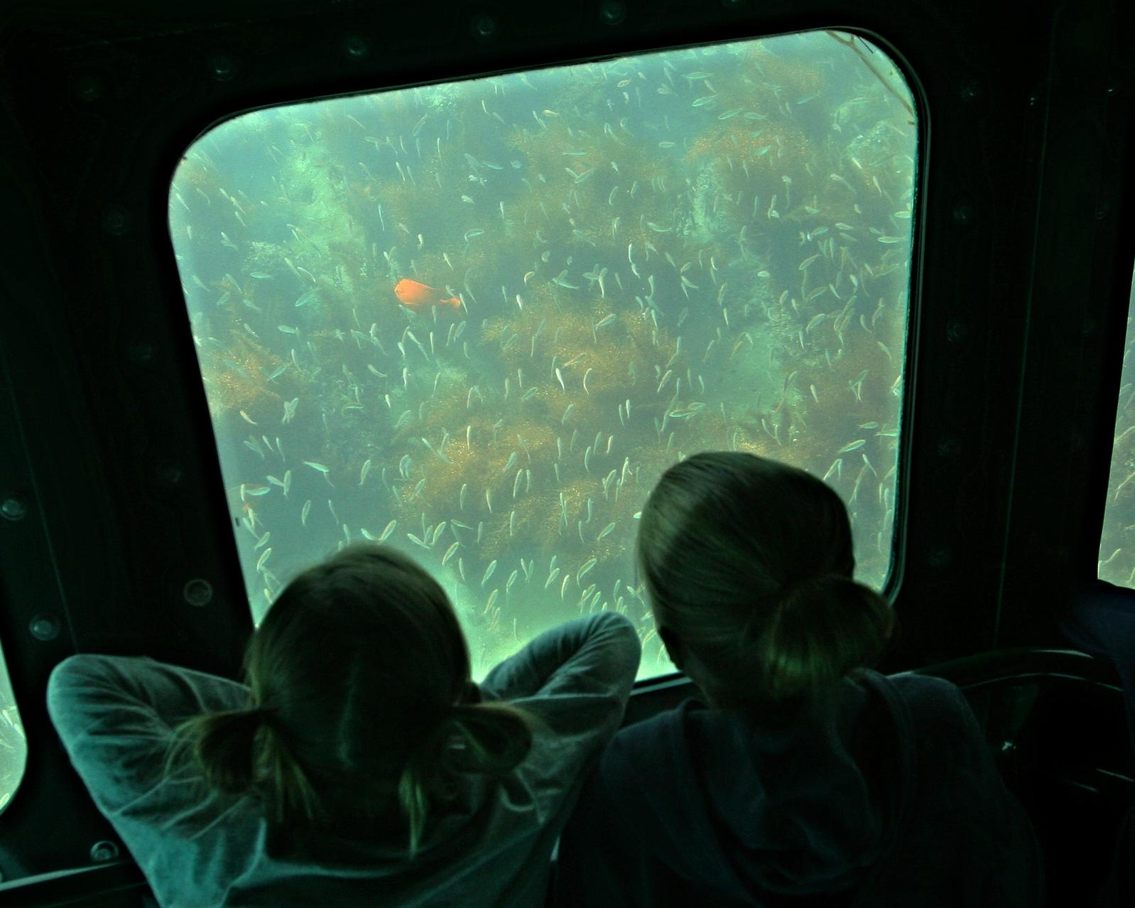 Submarine Views Marine Wildlife Cruise