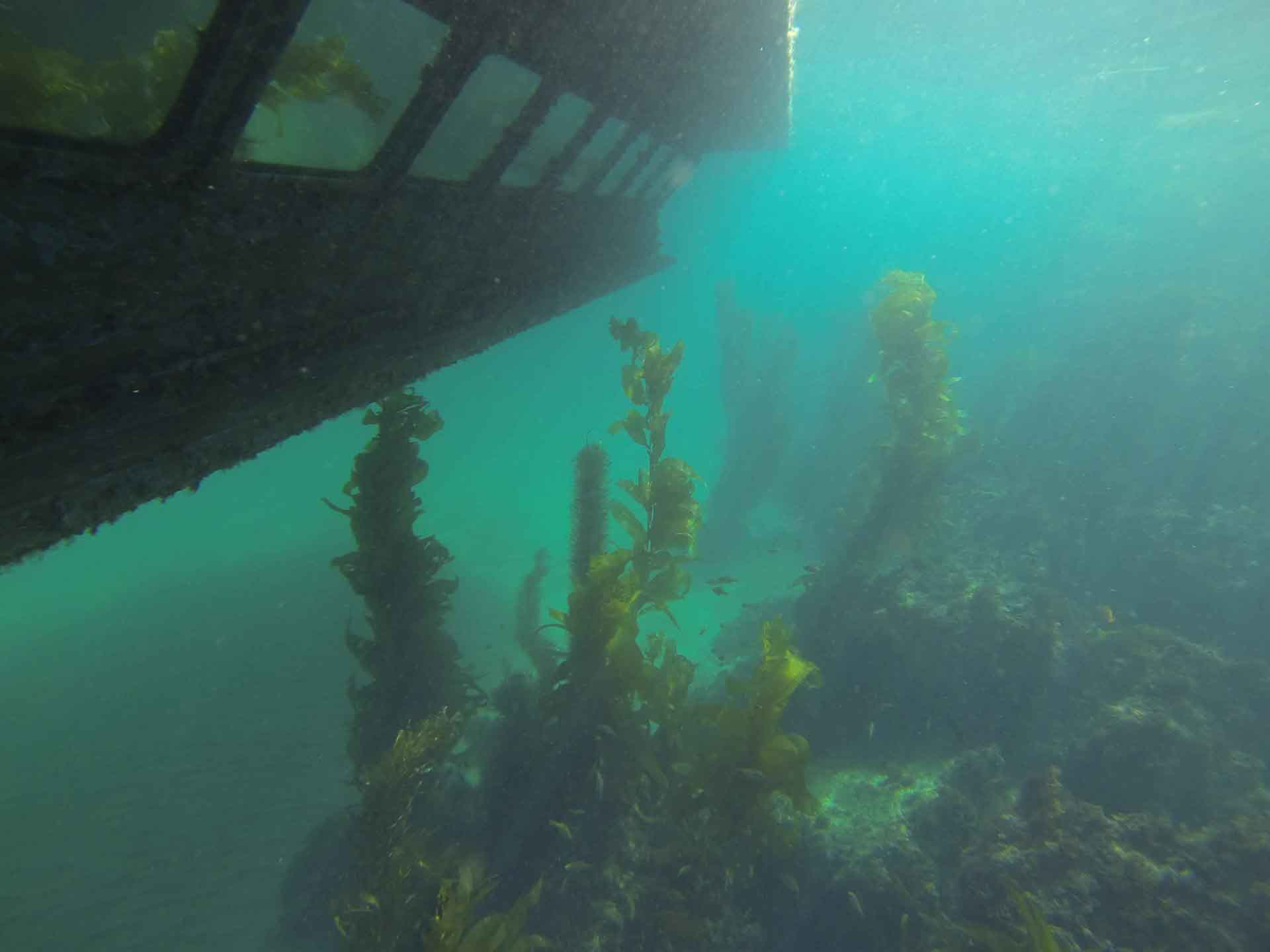 Underwater Windows Provide Unique Perspective