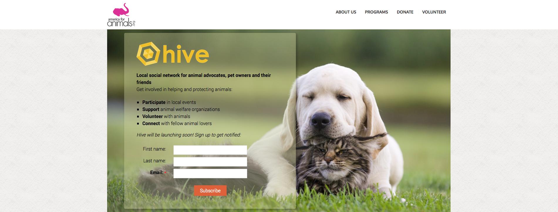 hive america for animals portfolio