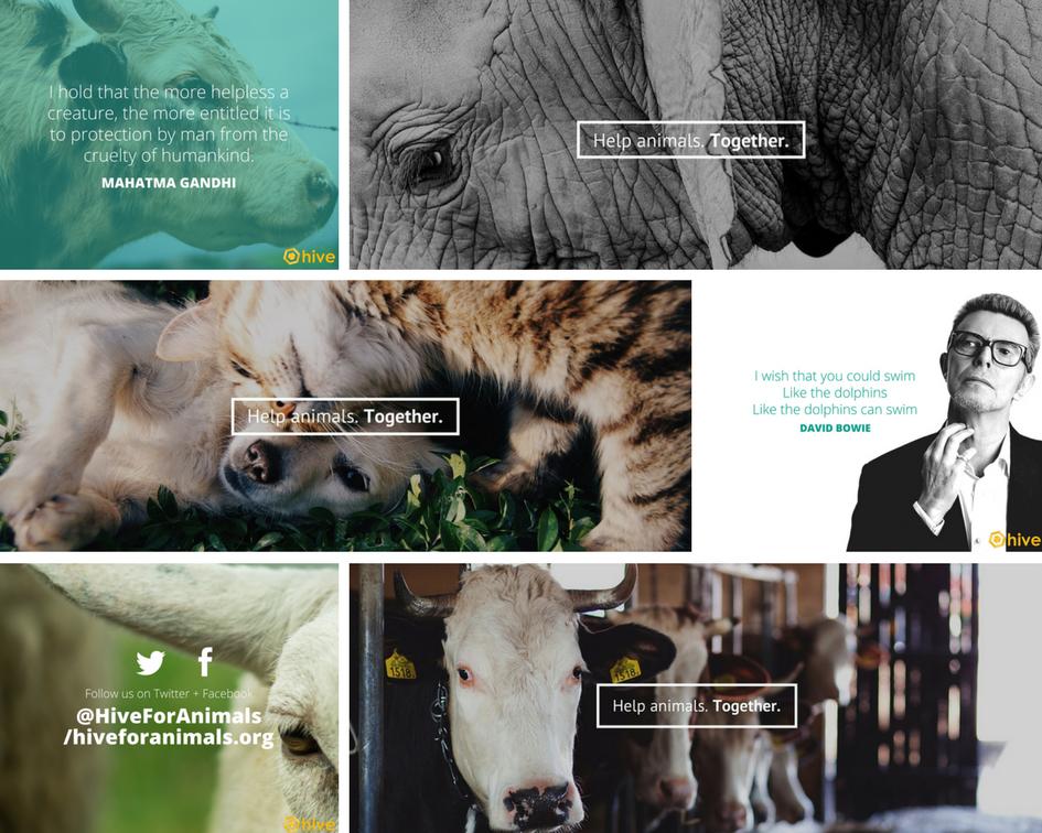 america for animals hive marketing portfolio