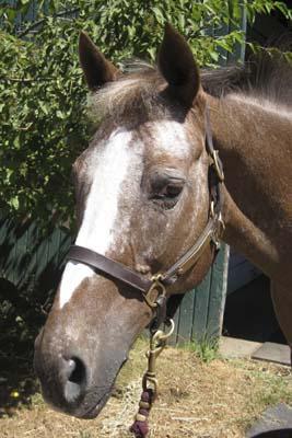 April, pony mare