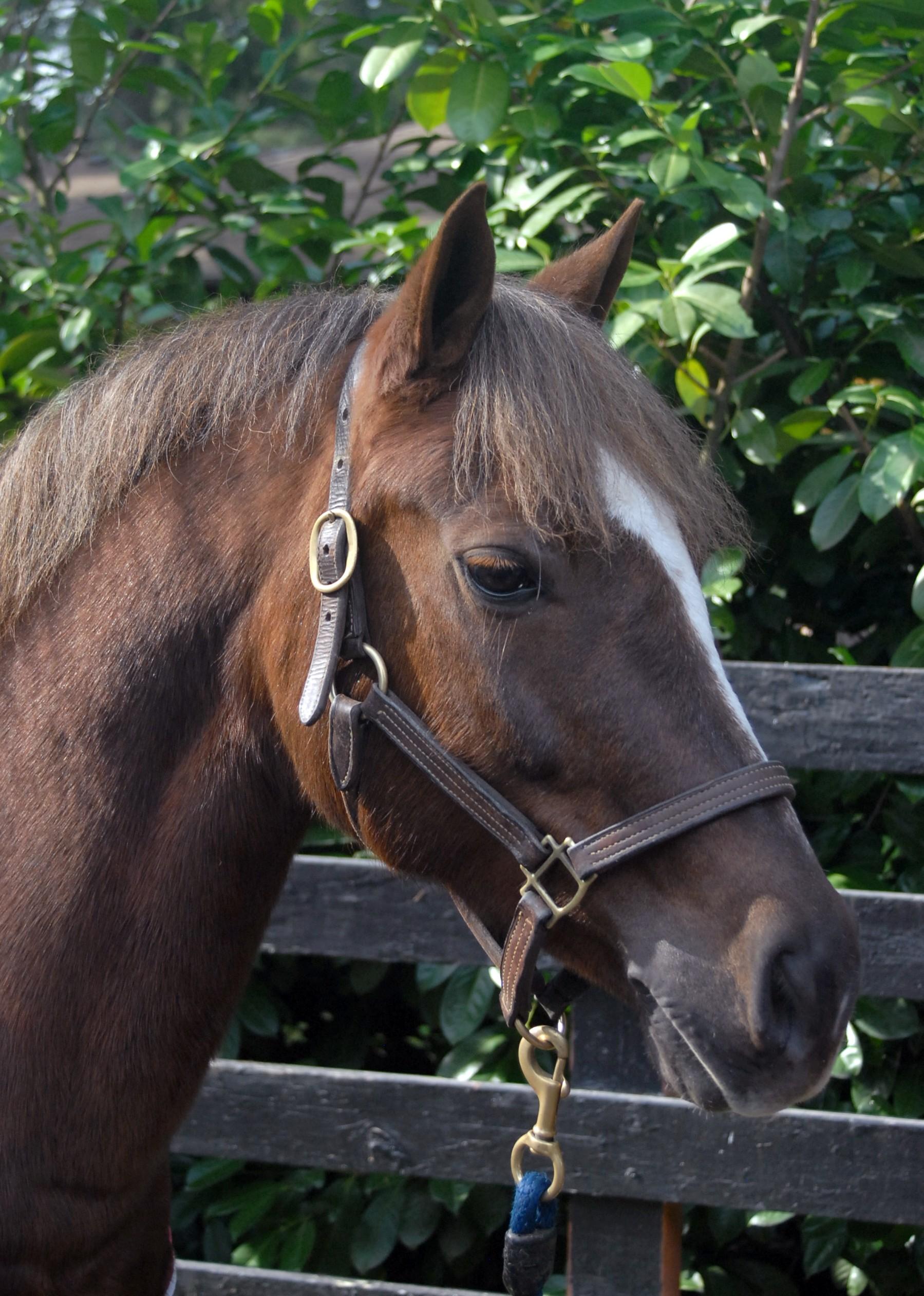 jesse, pony mare