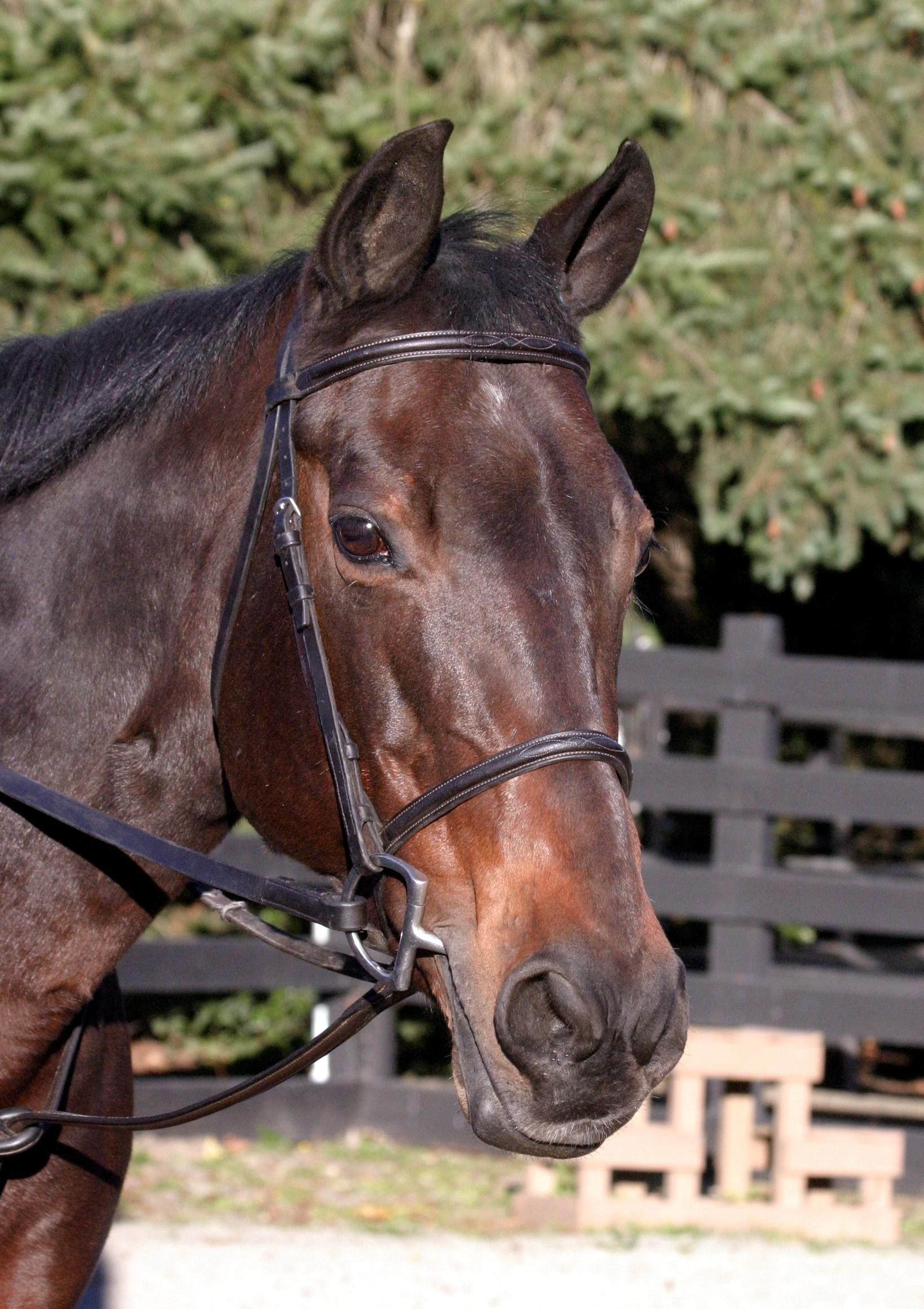 Lena, Quarter Horse Mare