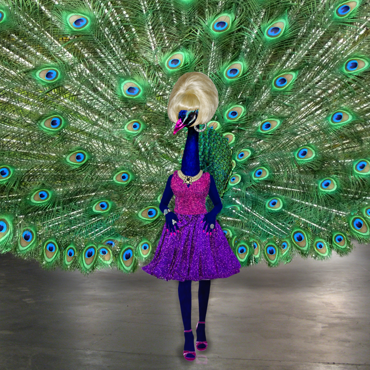 Peacock in Drag, 2015