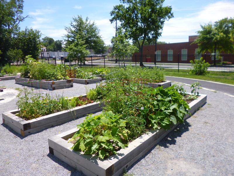 fonp-community-garden.jpg