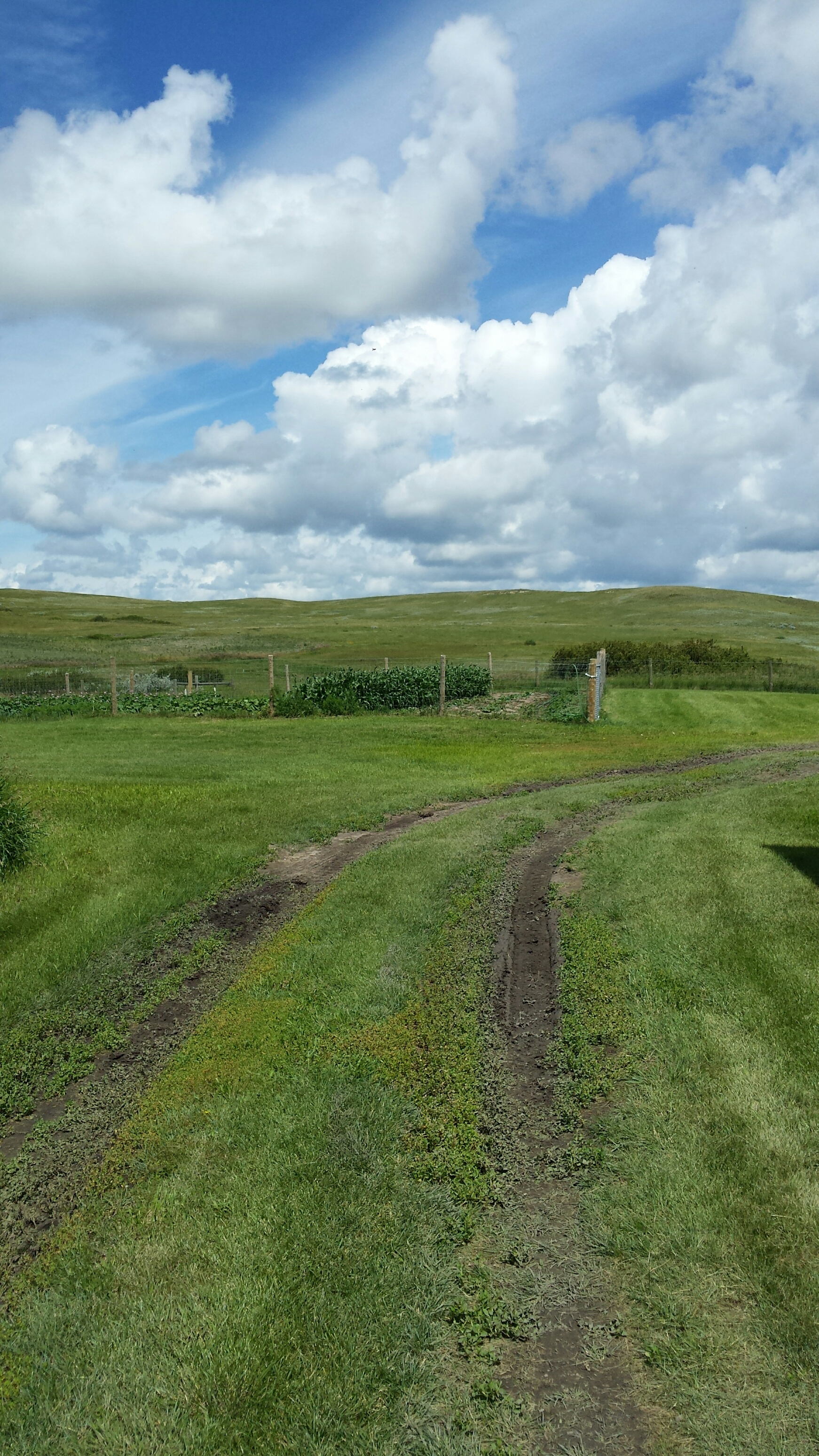 A garden patch behind Wood Mountain First Nation's community centre
