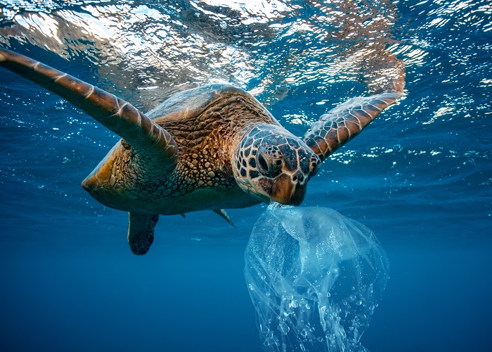 Sea turtles often mistake plastic bags for jellyfish.