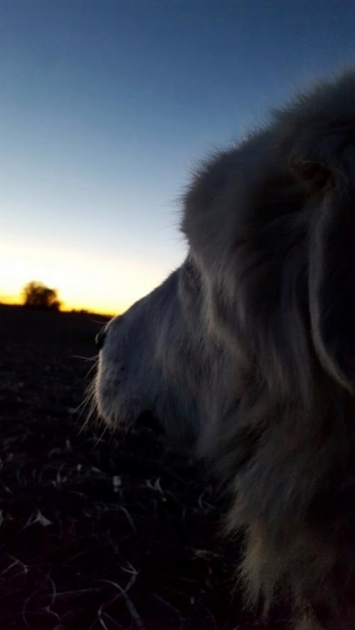 Jazzy at sunset.jpg