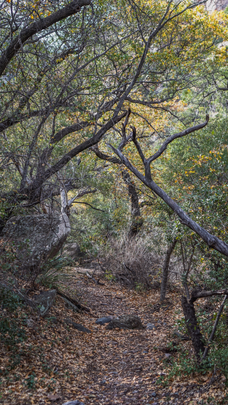 One of the best things about Pine Canyon is being able to see the different climates. Desert to forest, forest to lush waterfalls ... pretty cool!