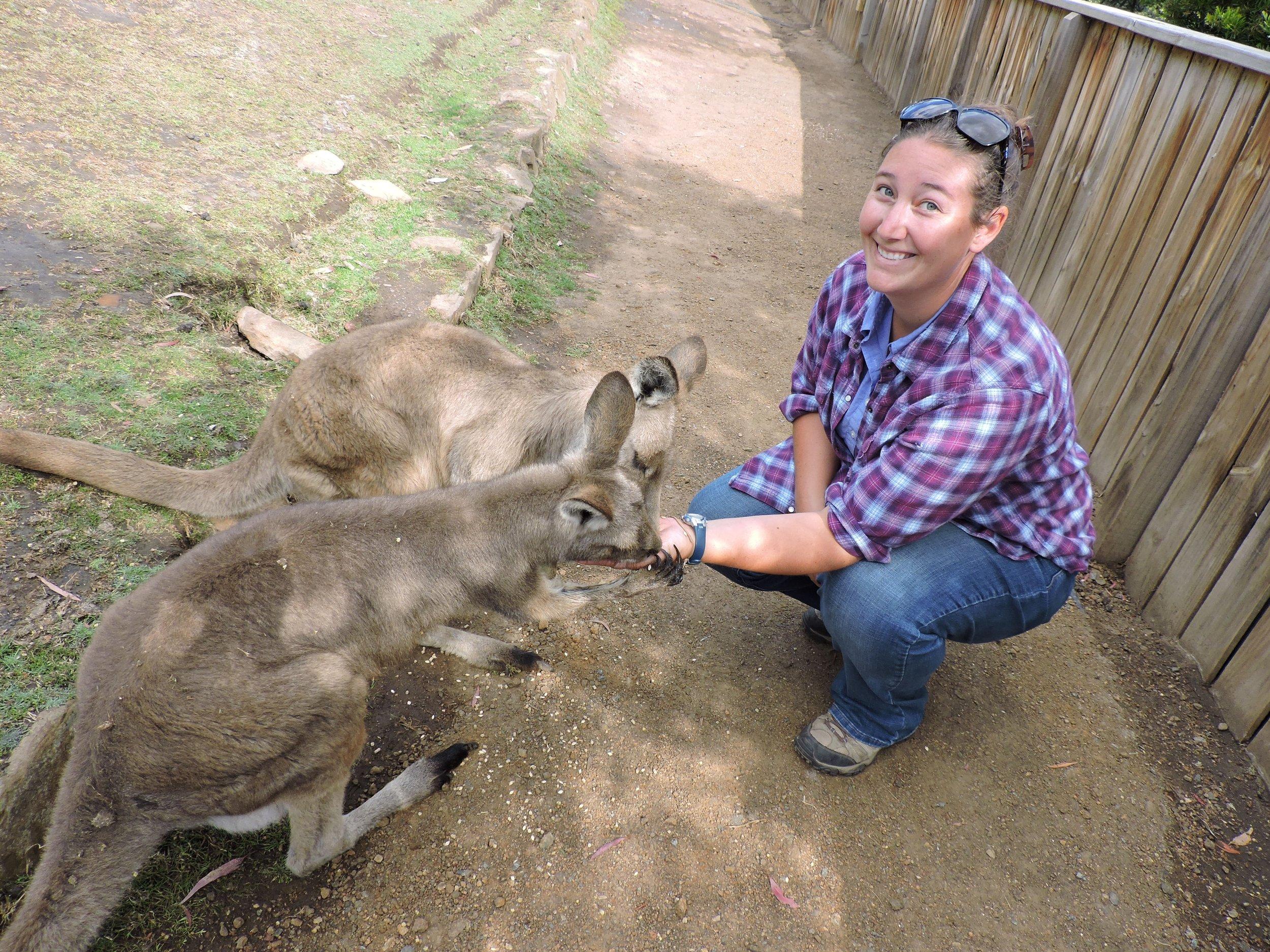 Erin feeding Eastern Grey Kangaroos in Tasmania.