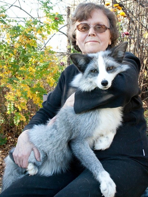 Dr. Ttut with a platinum fox in Russia