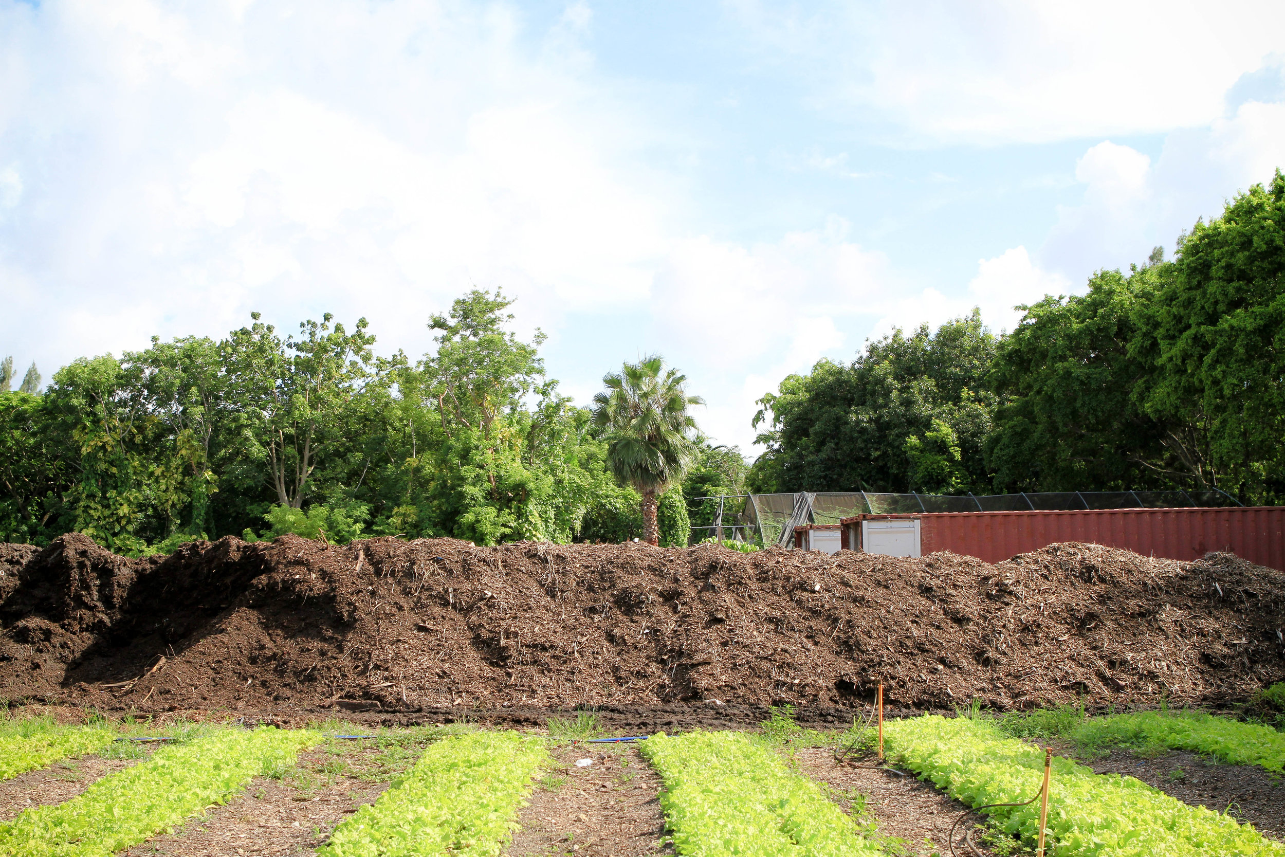 Piles of organic matter to be composted by our friends at Sun Fresh Farm