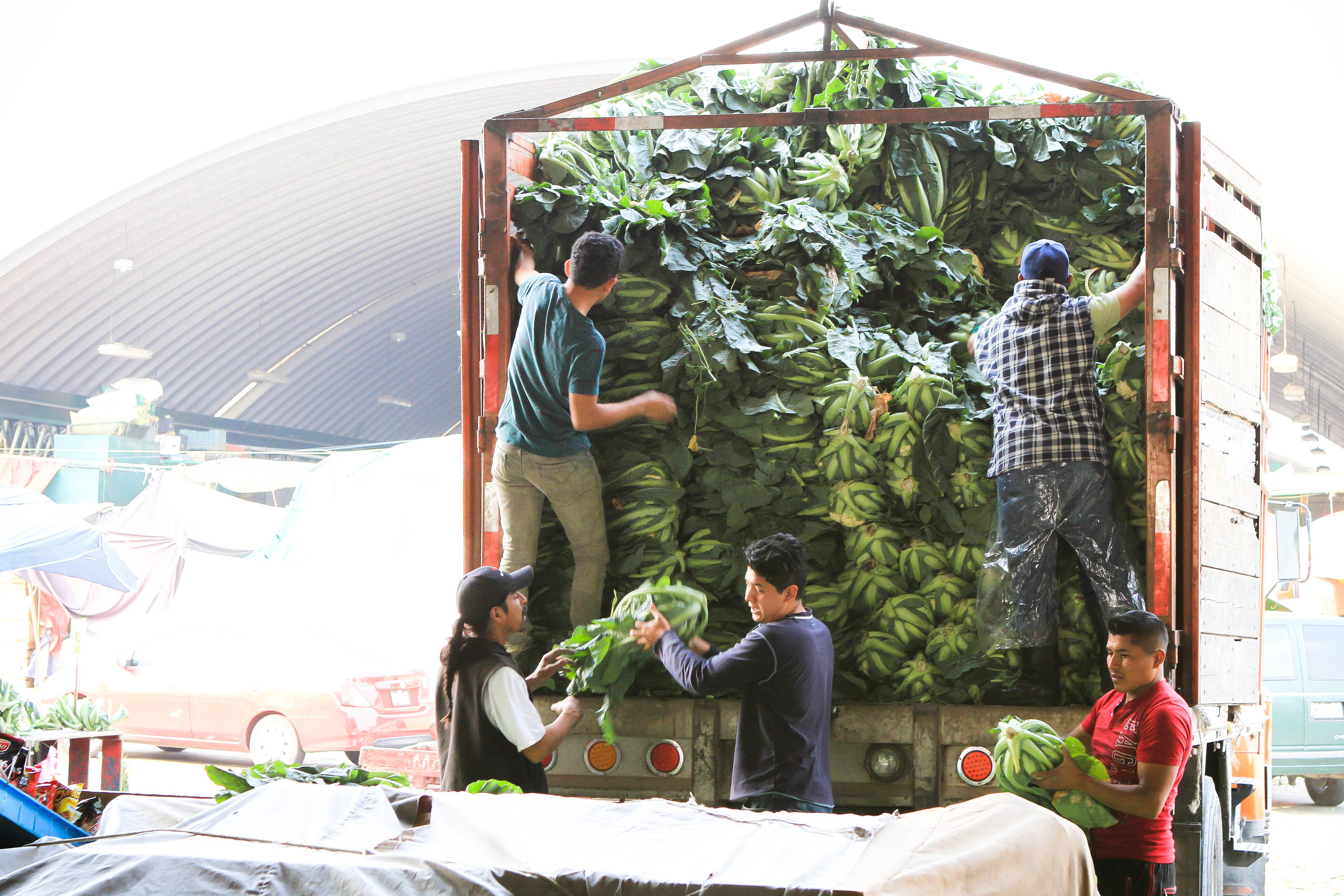 Workers unloading a massive amount of greens