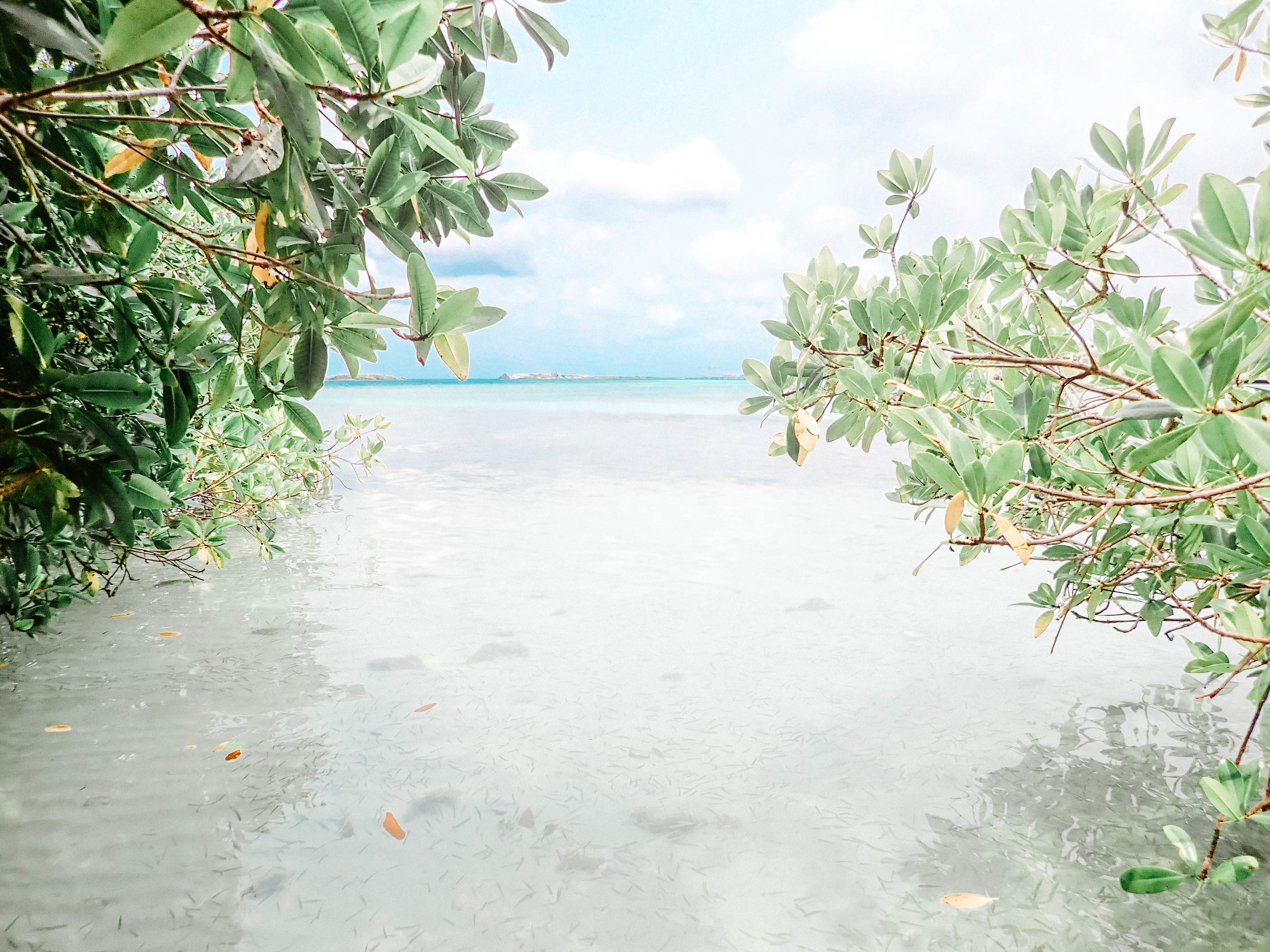 aruba water camera 2019.jpg