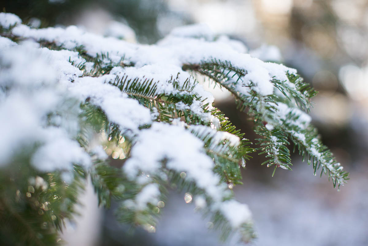 MegaBugPhotography_FirstSnow2017_Web-4.jpg