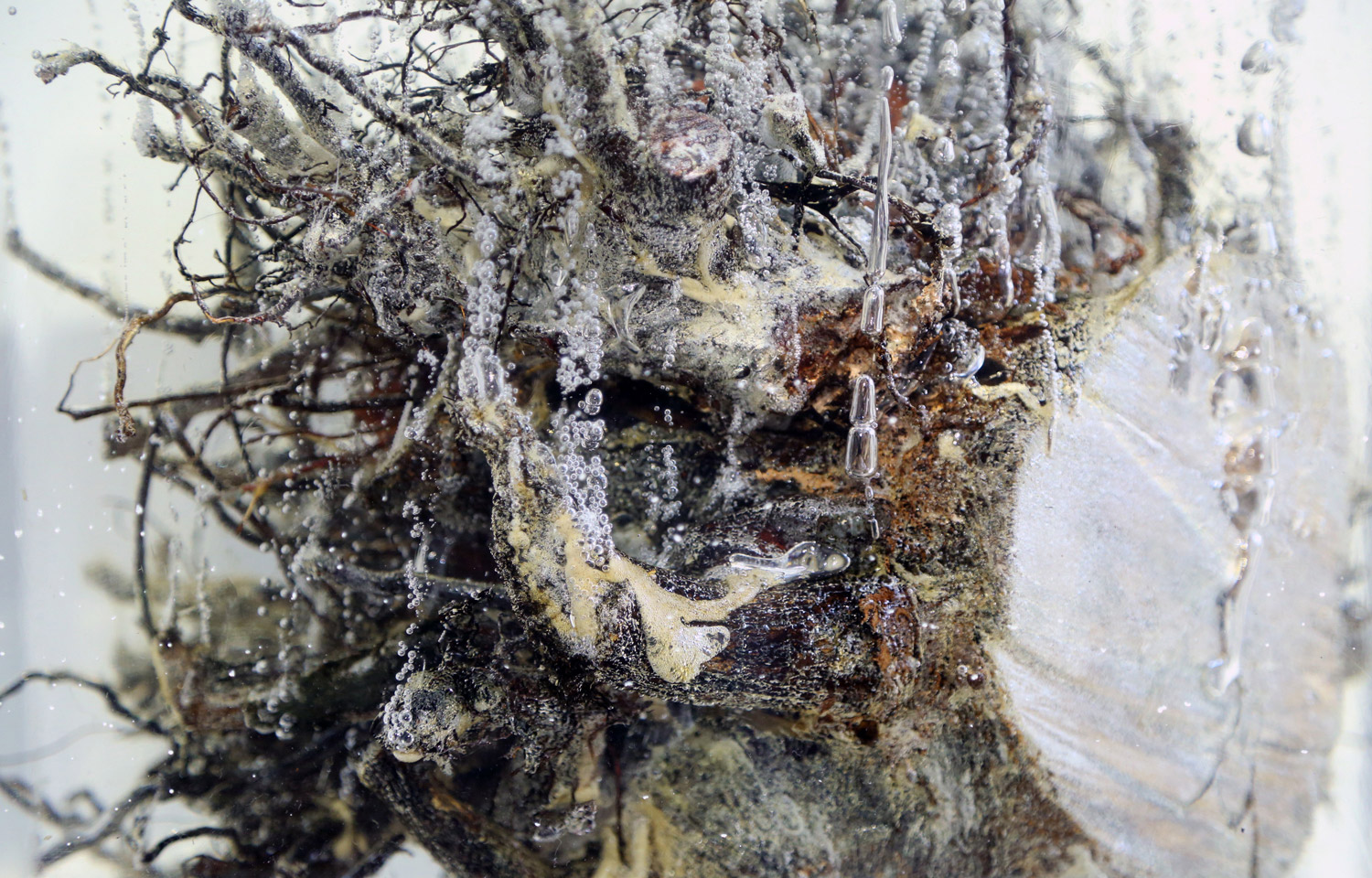 Tree Root in Solid:  In 2004, I was trying to create solid 7 feet resin cube, and experimented with different variables . During the process, I found many interesting chemical reactions resulting from different combinations between resin and organic form. Different combinations resulted in variations in air bubble and form, allowing me to explore the relationship between organic and artificial. The actual sculpture was completed in 2007.