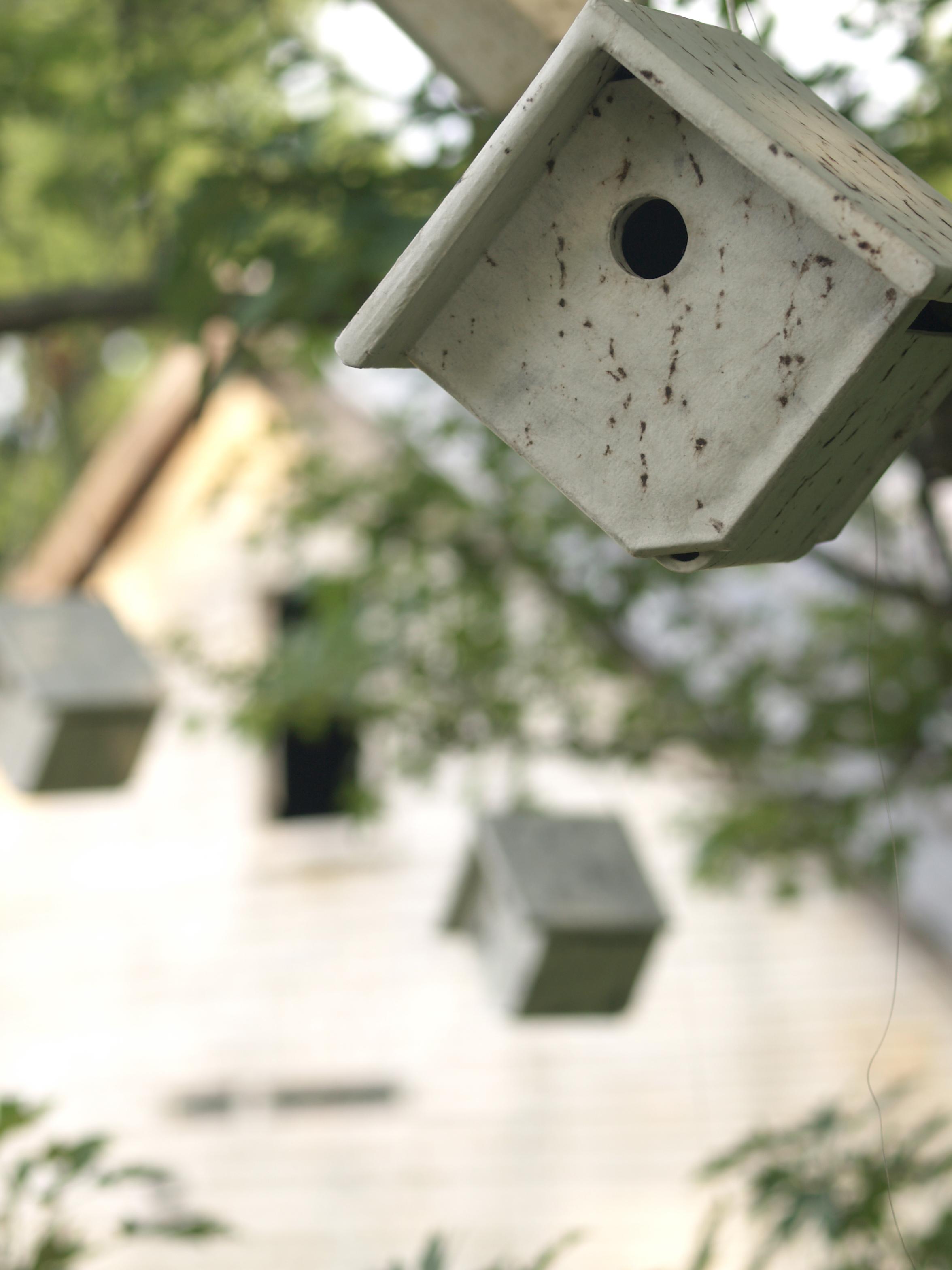 birdhouse up2.jpg