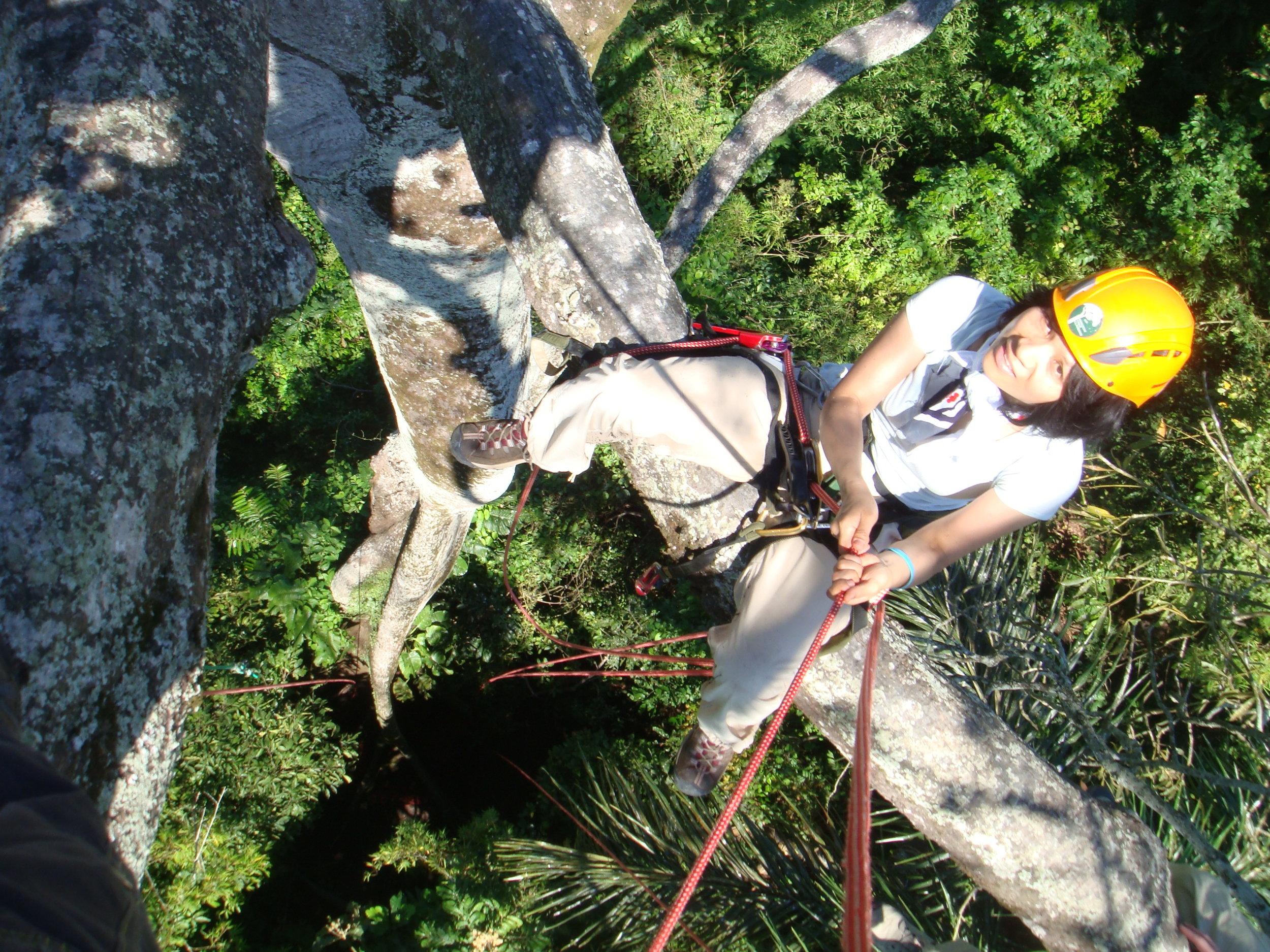manaus_tree_climbing.JPG