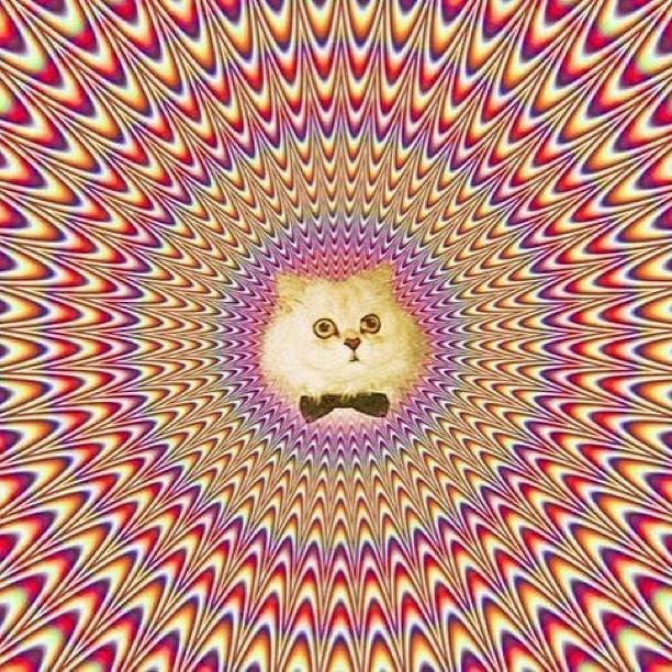 Hypno cat!!