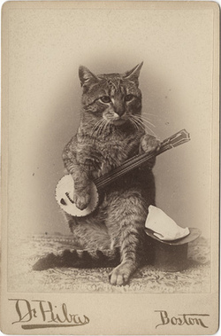 Cat Playing a Banjo Cabinet Card **Other Cat Photographic Models!  by  Photo_History  on Flickr.  twang