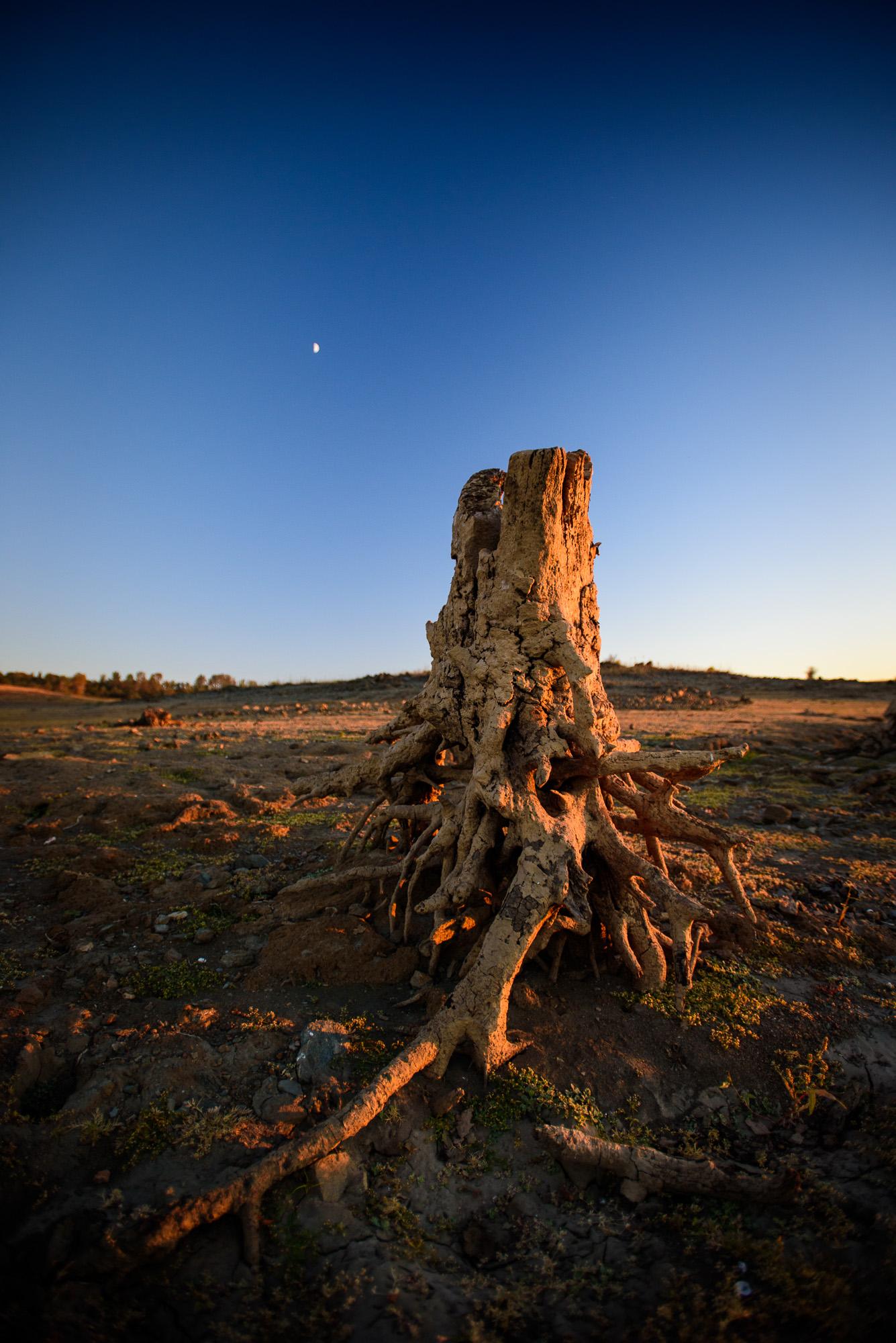 folsom_lake_tree_stump_brittany_app.jpg