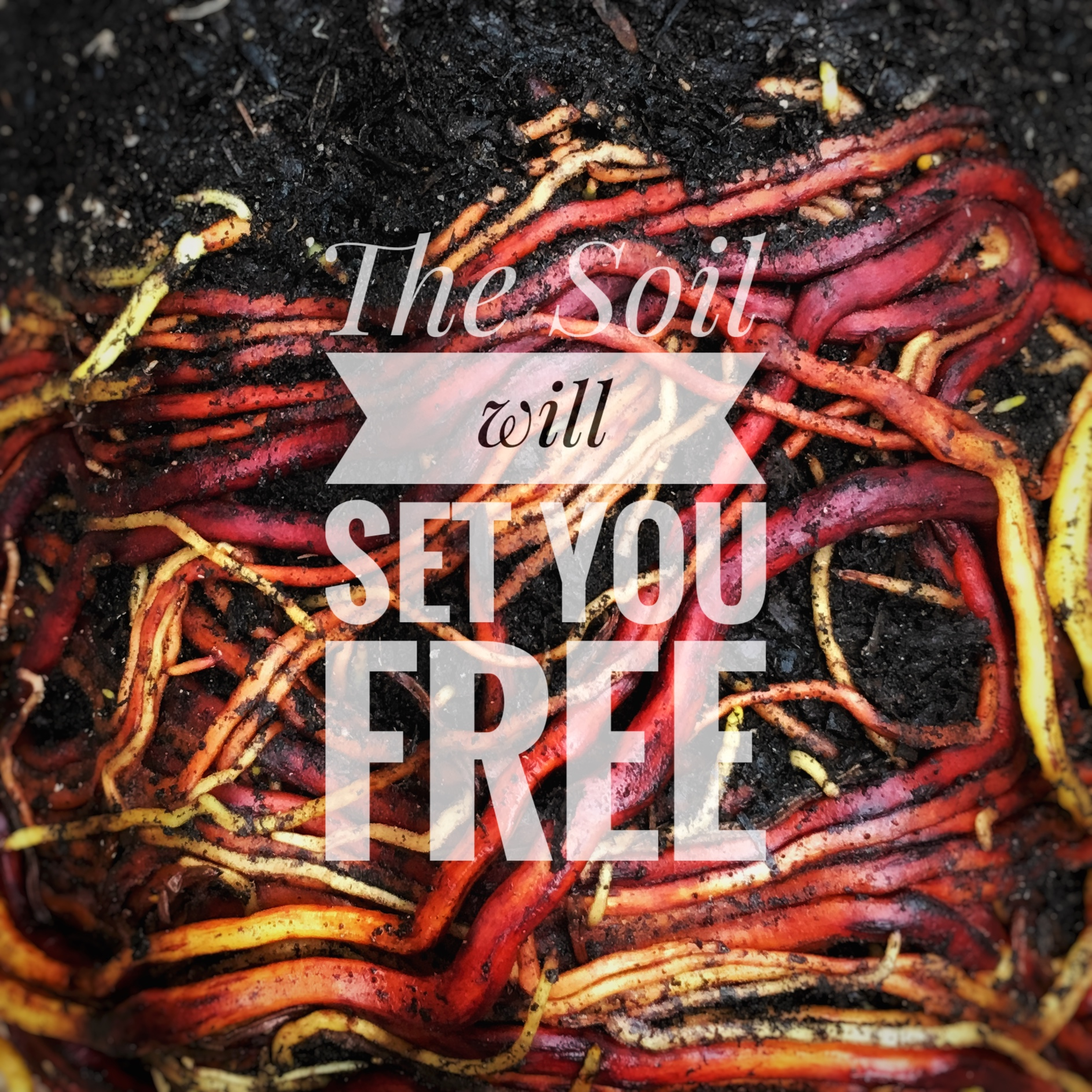 WTOWW_soil_free.jpg