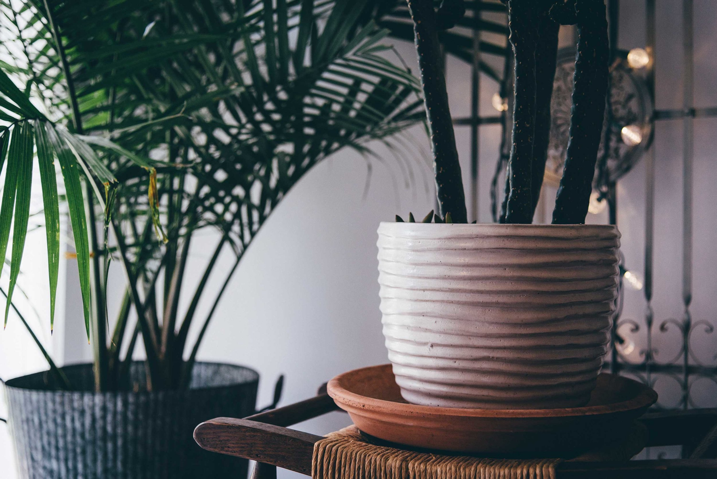 Indoor plants are proving popular in homes, and with quantifiable health benefits, what's not to love about that?