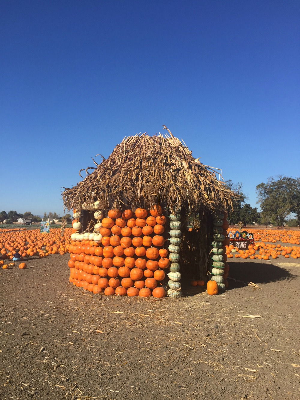 House of pumpkins in our hometown