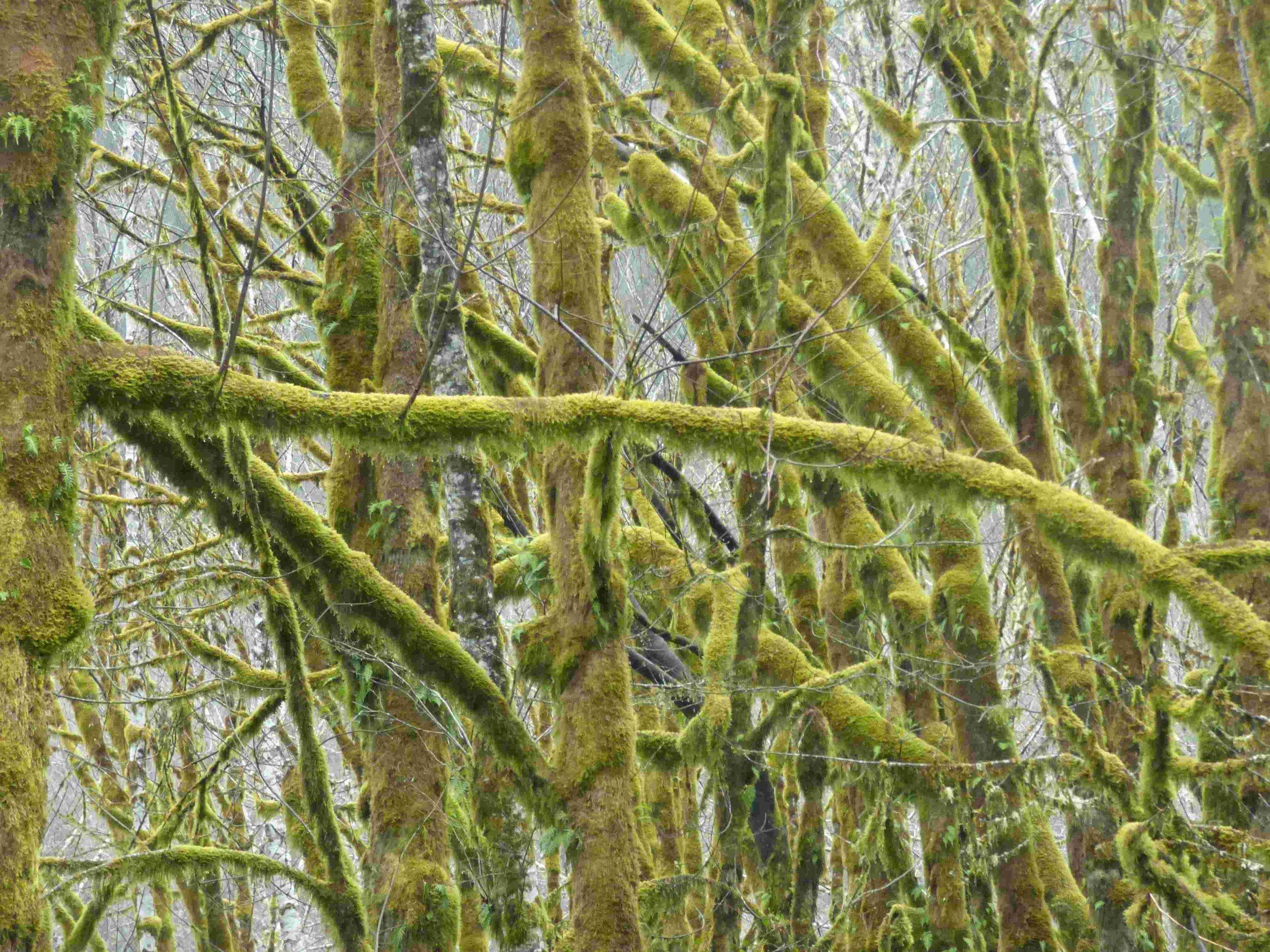 puut.jpg