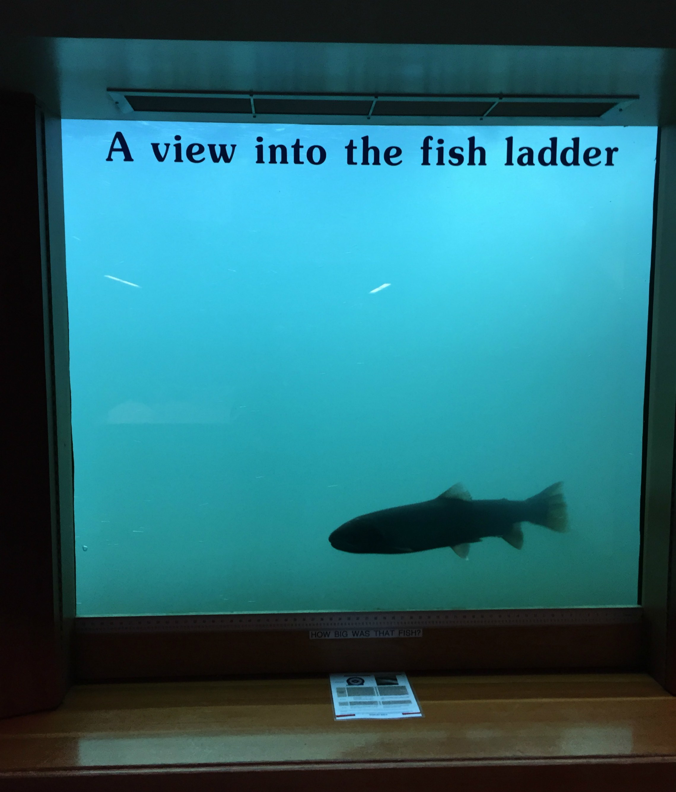 fish_ladder.jpg