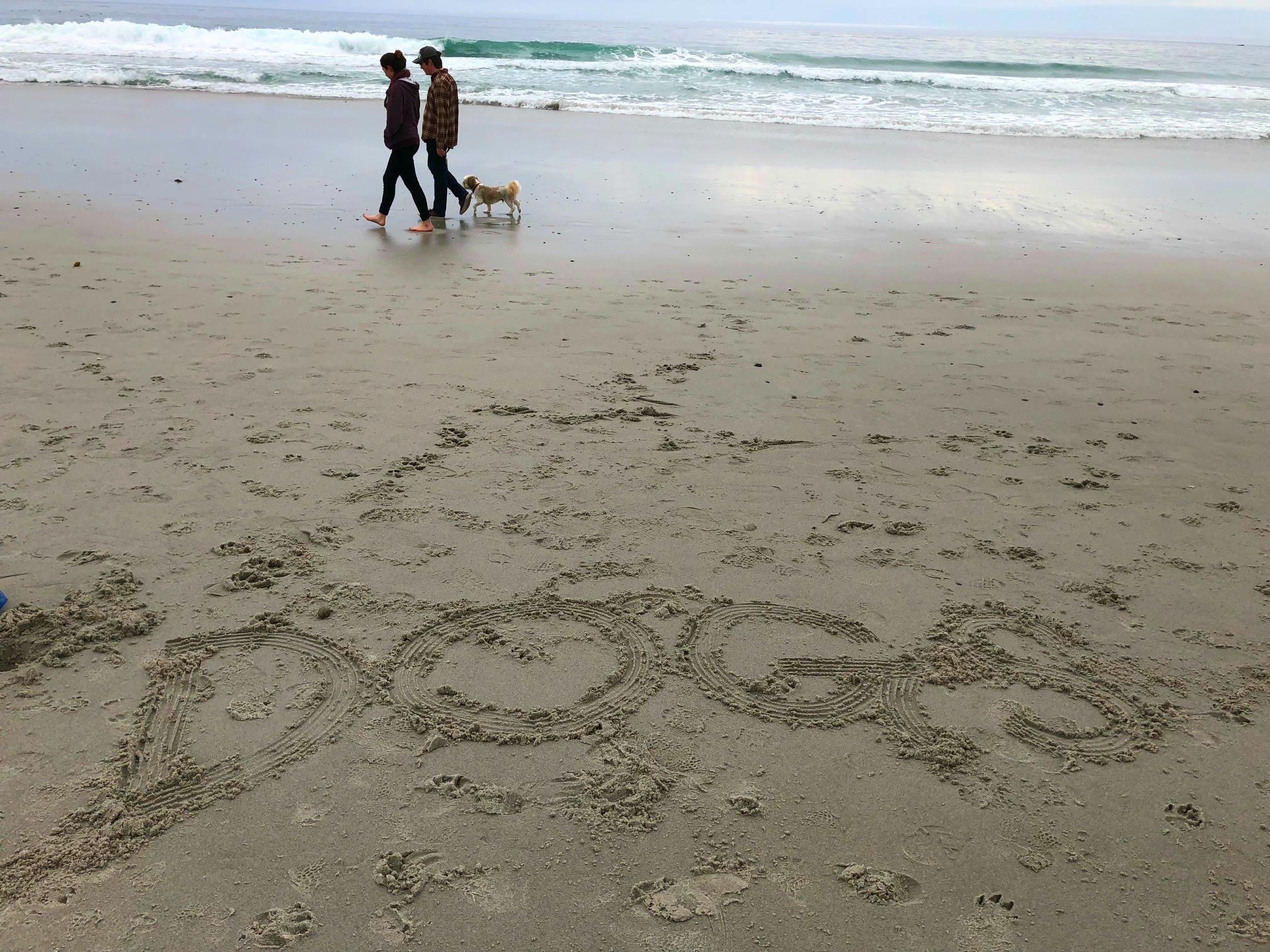 carmel_dog_beach.jpg