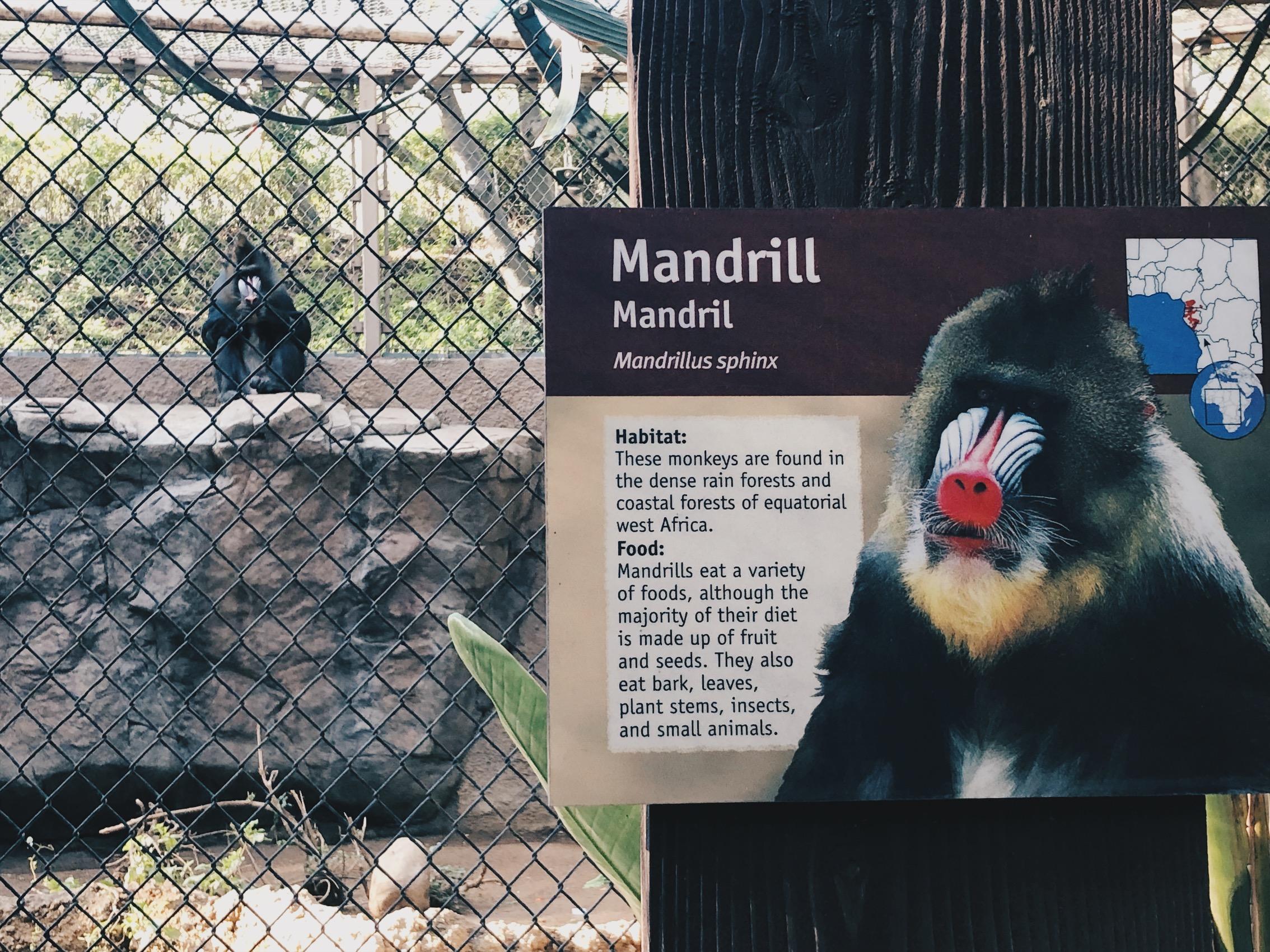 Tämä Mandrill jäi erityisesti mieleeni. Samoin kuin Komodo Dragon jollaisen haluaisin jonain päivänä nähdä luonnossa.