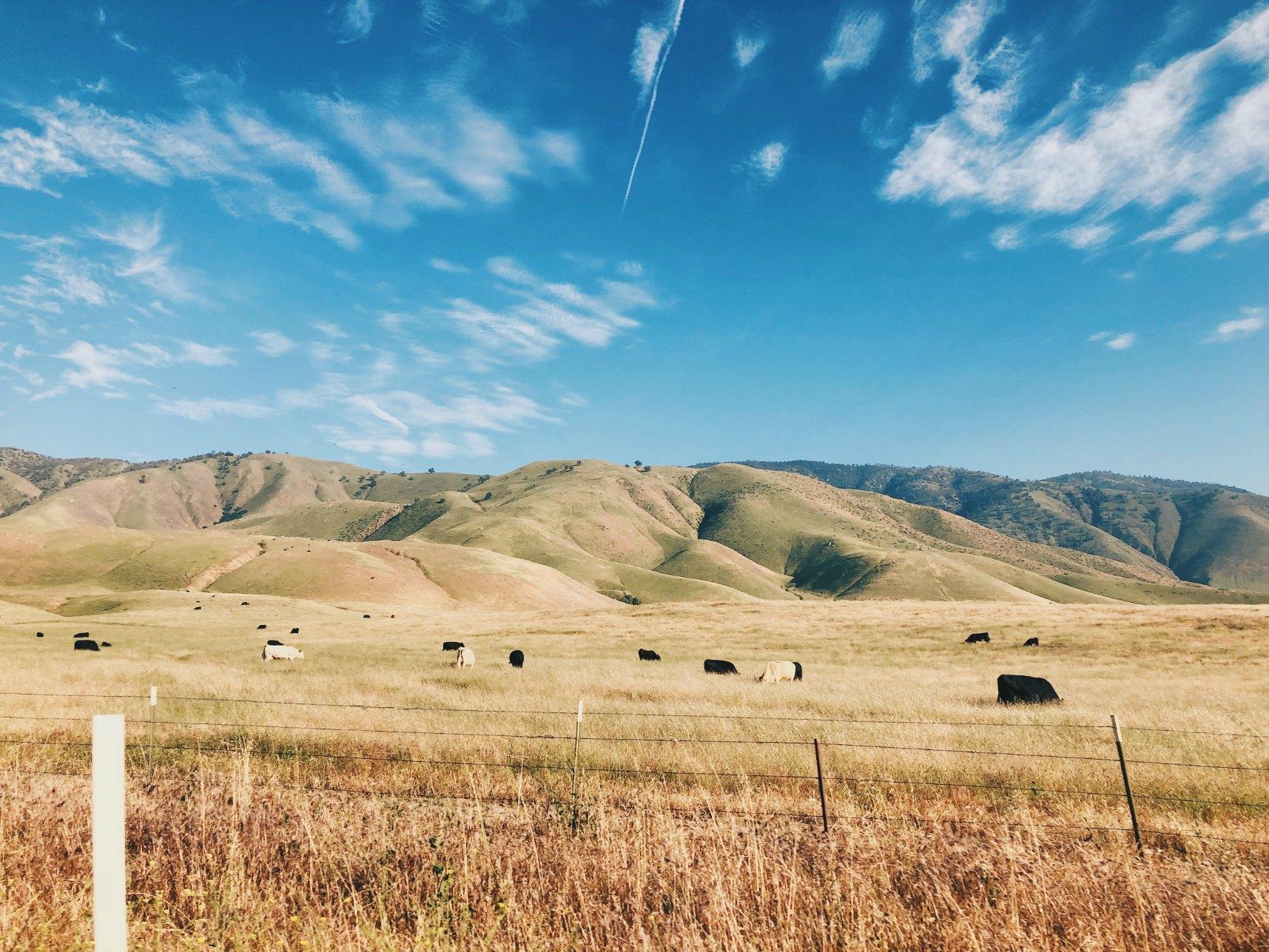 kalifornia_niitty.jpg